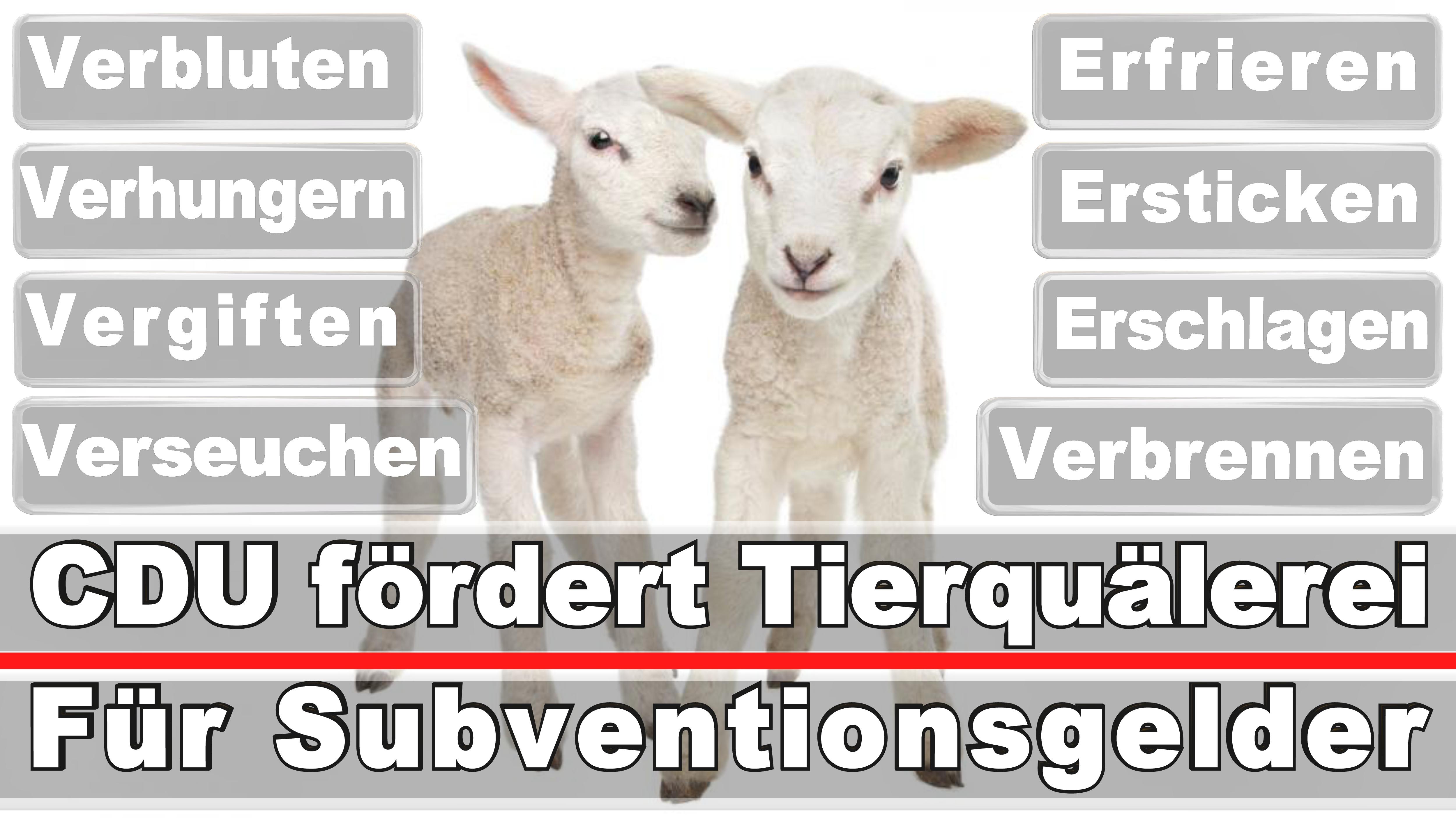 Landtagswahl-Bundestagswahl-CDU-SPD-FDP-AFD-Linke-Piraten (1)