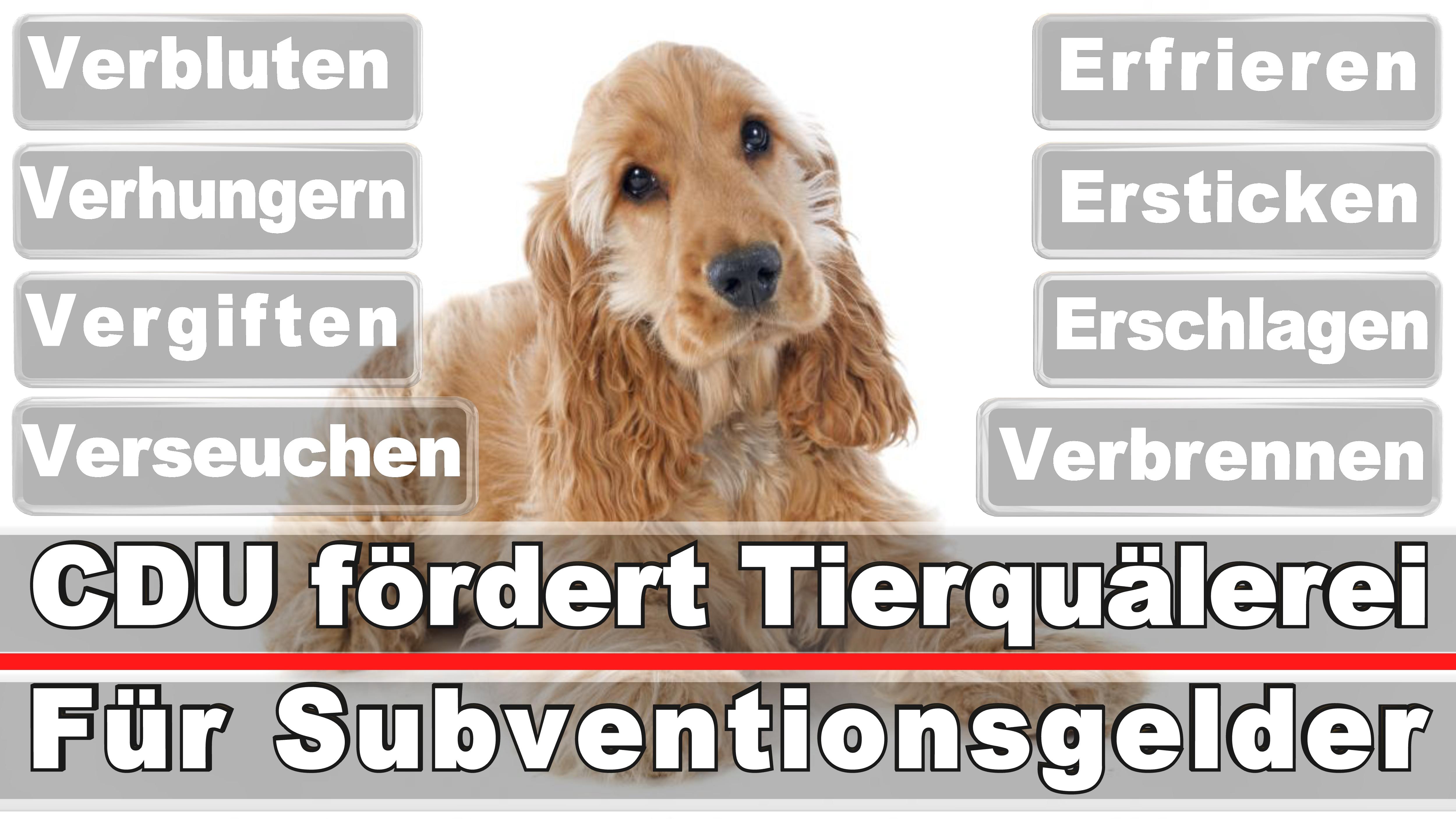 Landtagswahl-Bundestagswahl-CDU-SPD-FDP-AFD-Linke-Piraten (10)