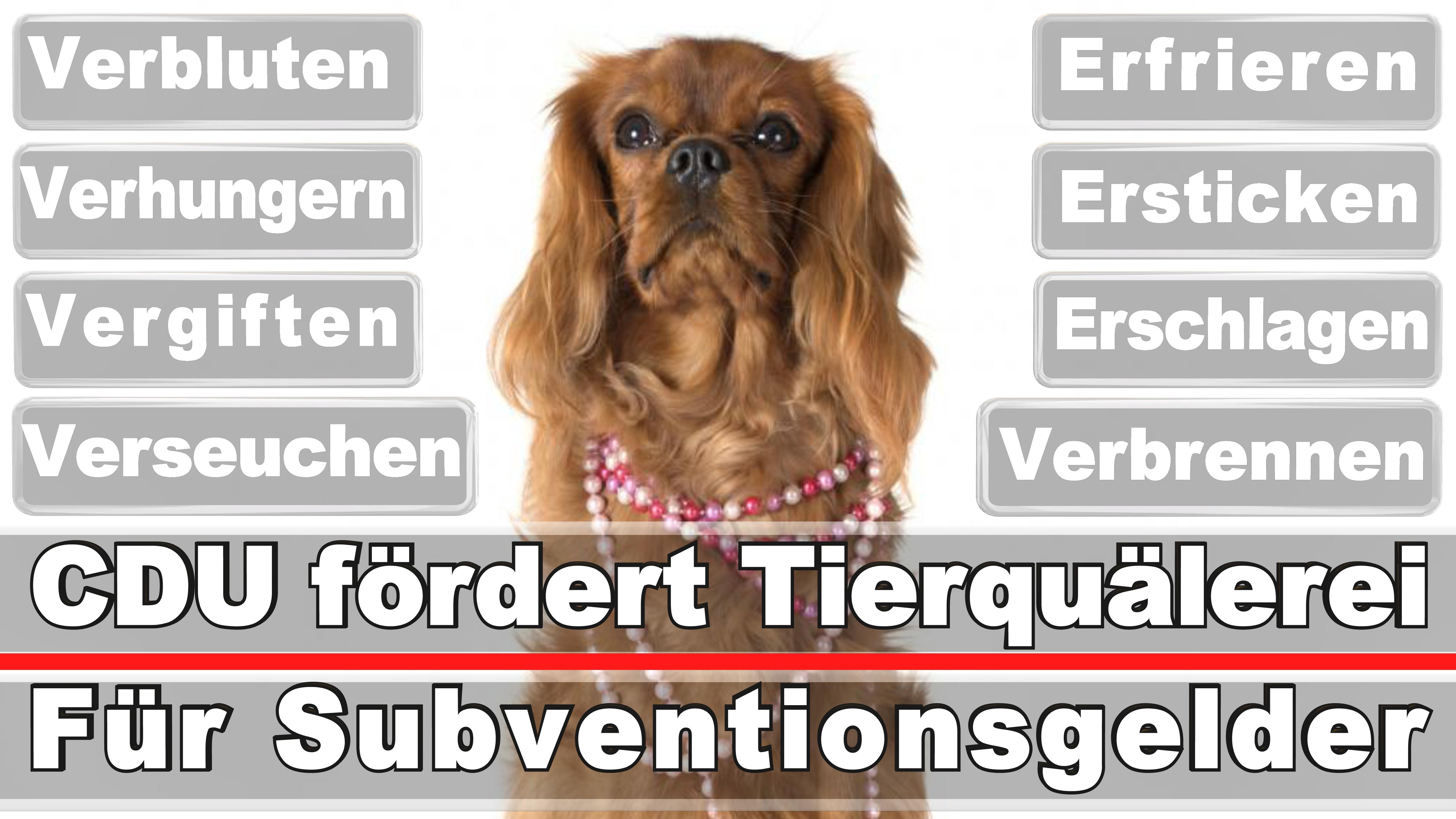 Landtagswahl-Bundestagswahl-CDU-SPD-FDP-AFD-Linke-Piraten (12)