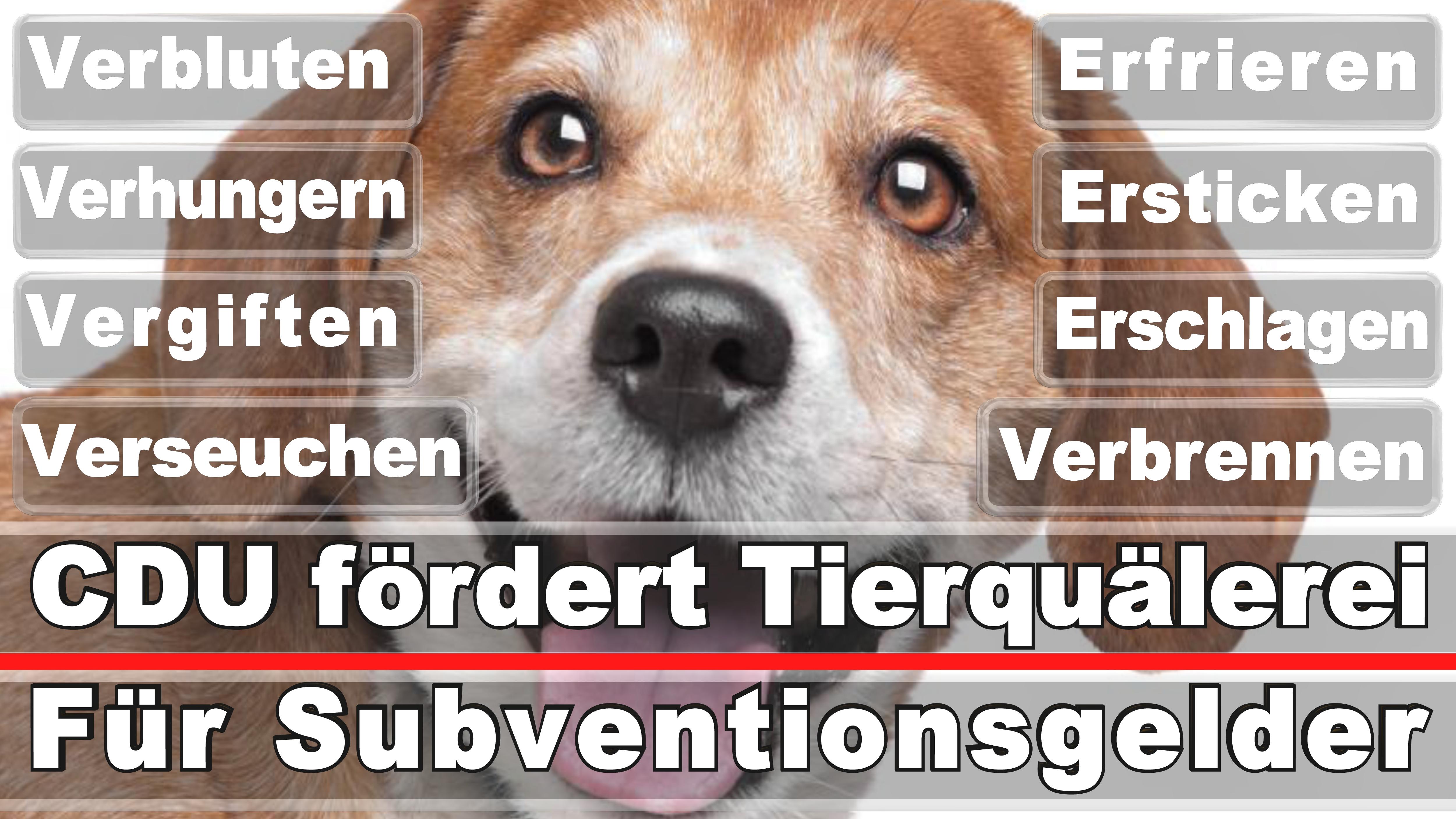 Landtagswahl-Bundestagswahl-CDU-SPD-FDP-AFD-Linke-Piraten (13)