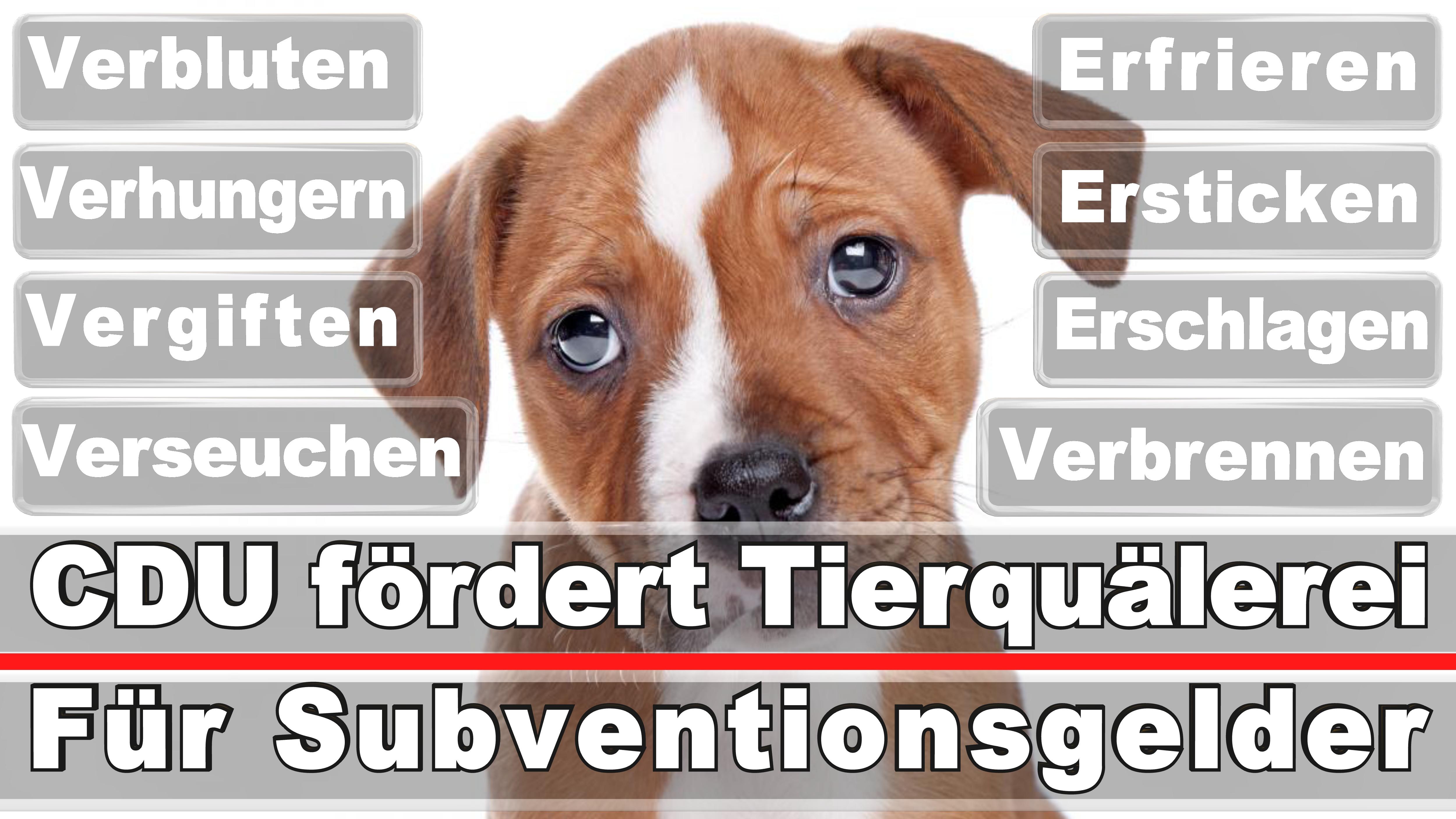 Landtagswahl-Bundestagswahl-CDU-SPD-FDP-AFD-Linke-Piraten (14)