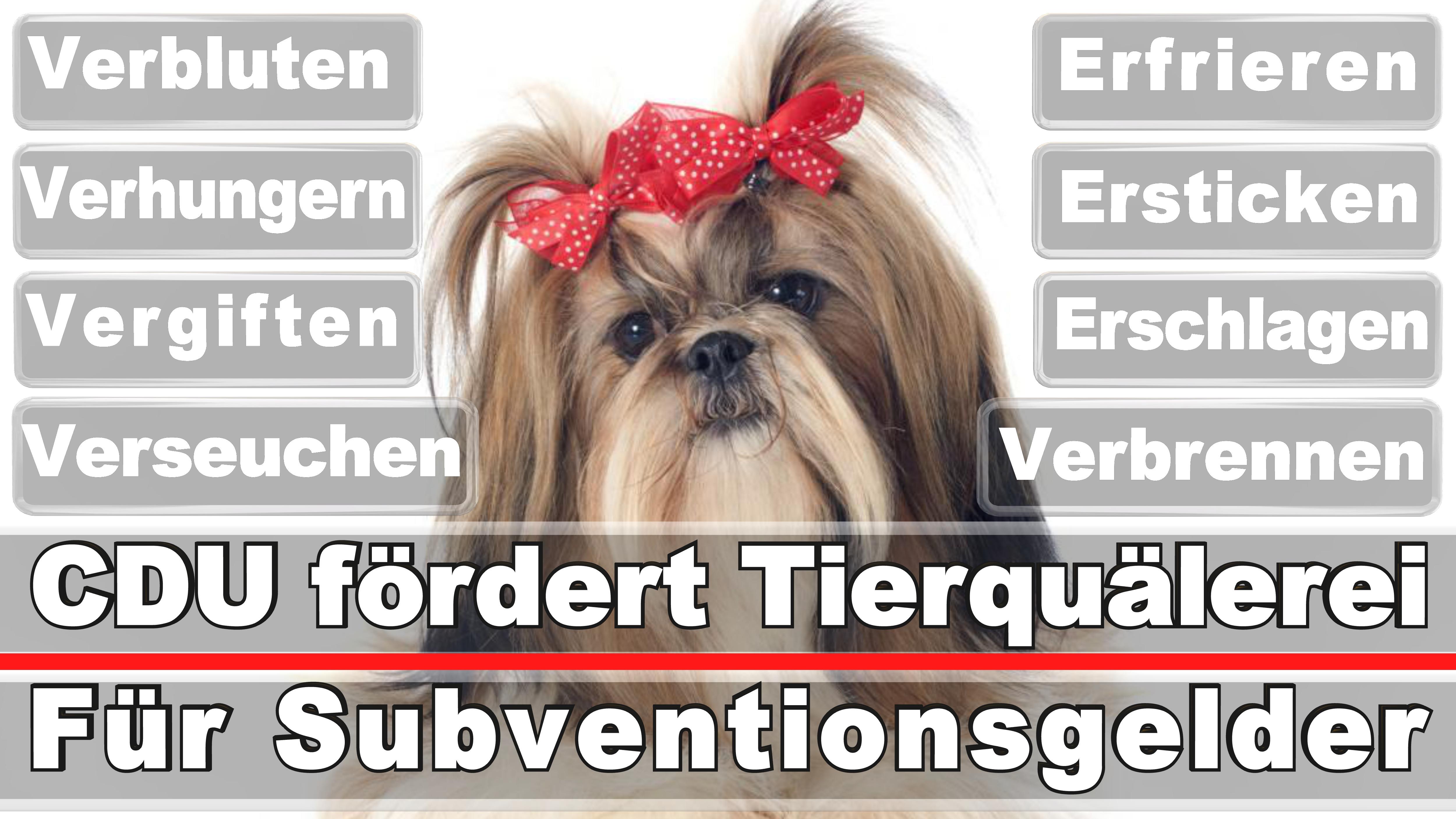 Landtagswahl-Bundestagswahl-CDU-SPD-FDP-AFD-Linke-Piraten (16)