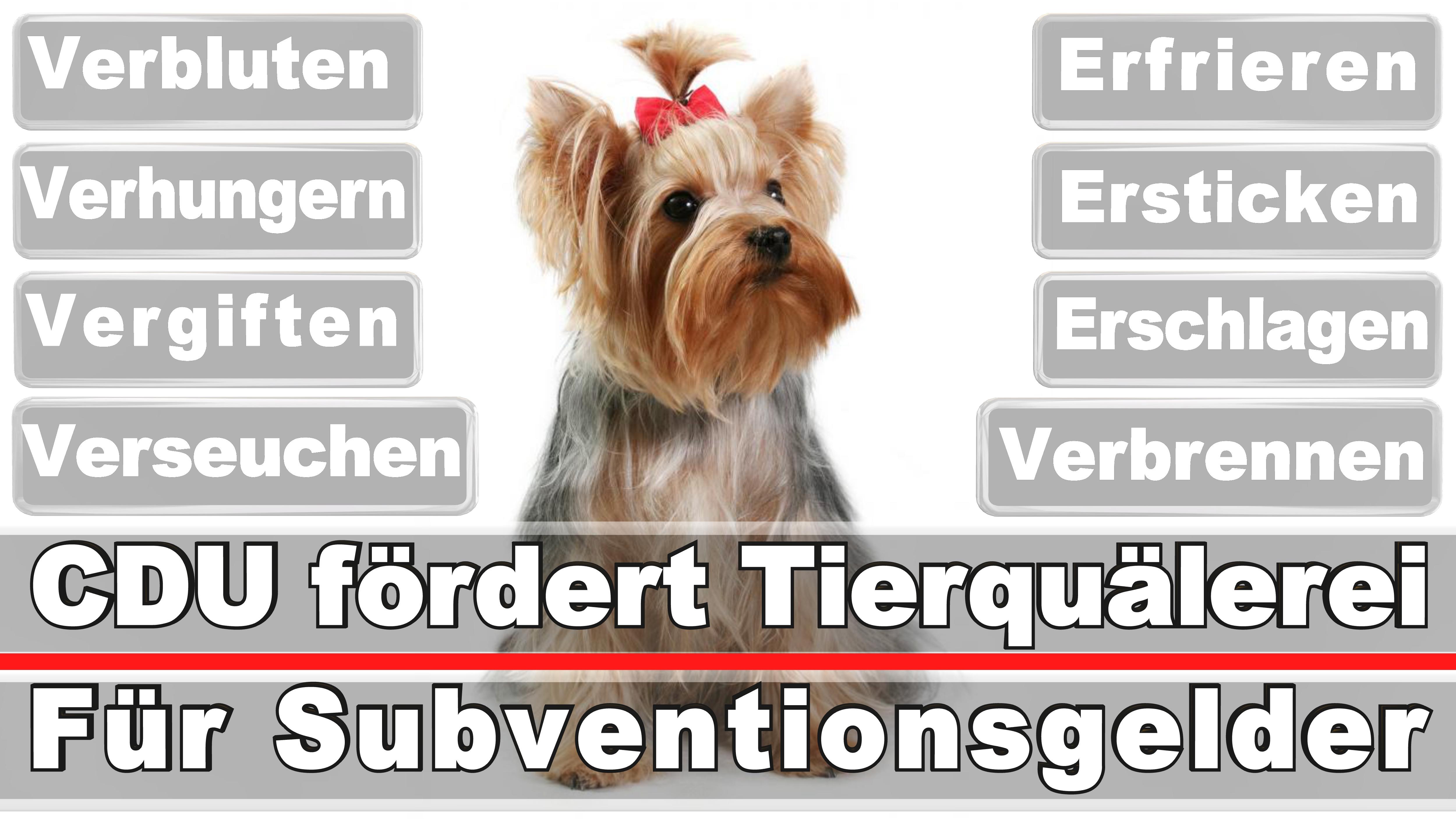 Landtagswahl-Bundestagswahl-CDU-SPD-FDP-AFD-Linke-Piraten (19)