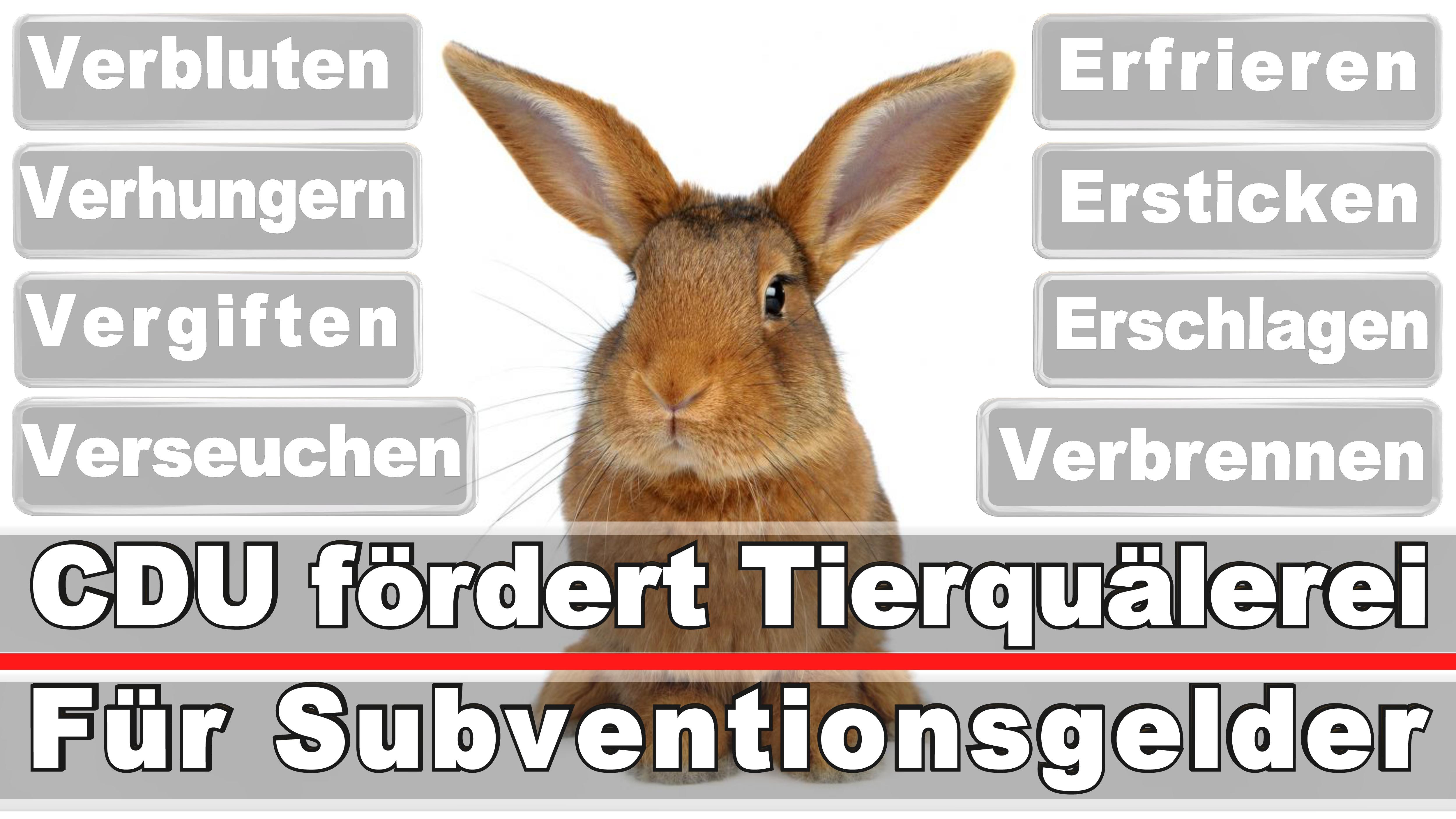 Landtagswahl-Bundestagswahl-CDU-SPD-FDP-AFD-Linke-Piraten (2)
