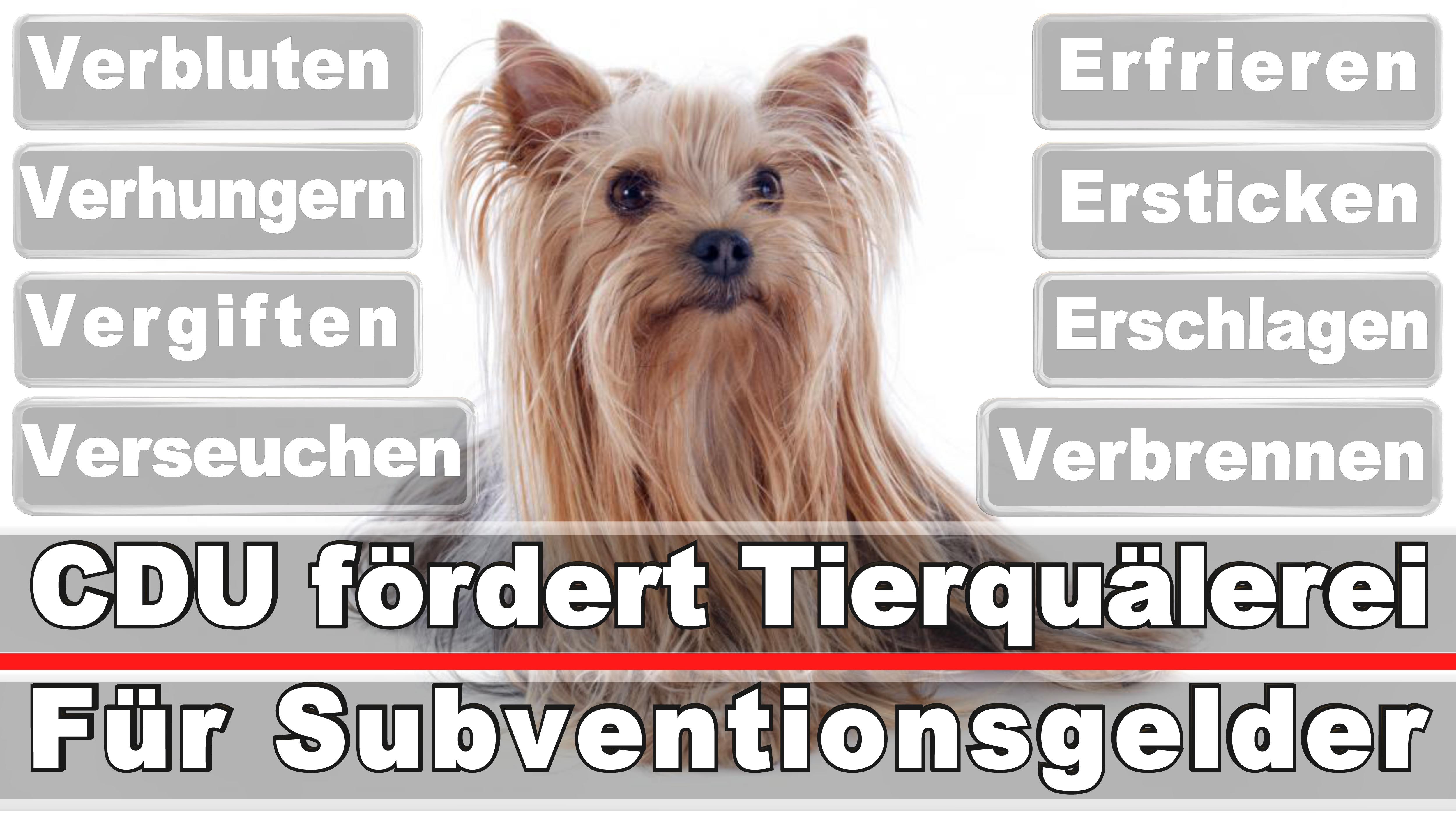 Landtagswahl-Bundestagswahl-CDU-SPD-FDP-AFD-Linke-Piraten (20)