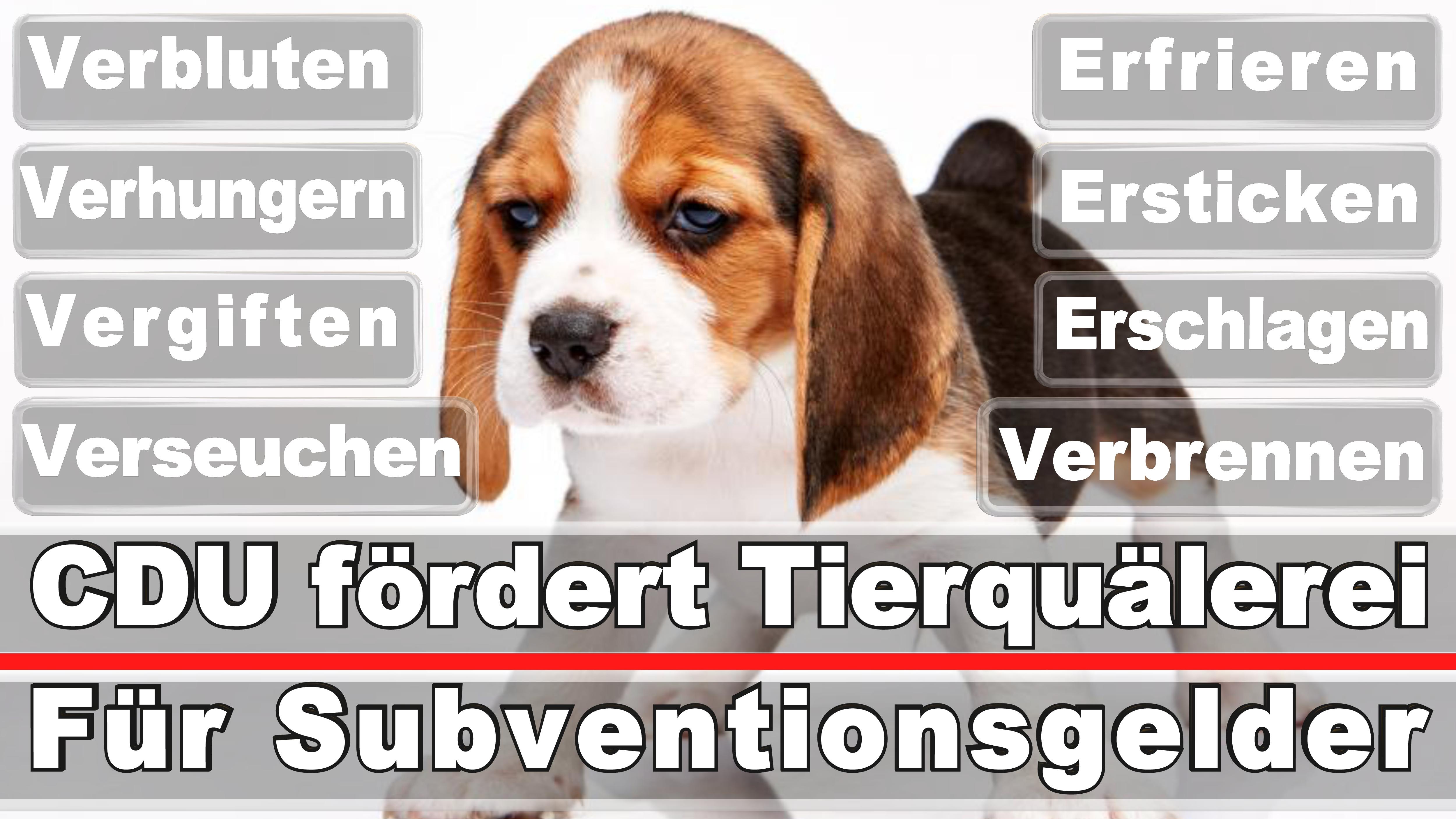 Landtagswahl-Bundestagswahl-CDU-SPD-FDP-AFD-Linke-Piraten (21)