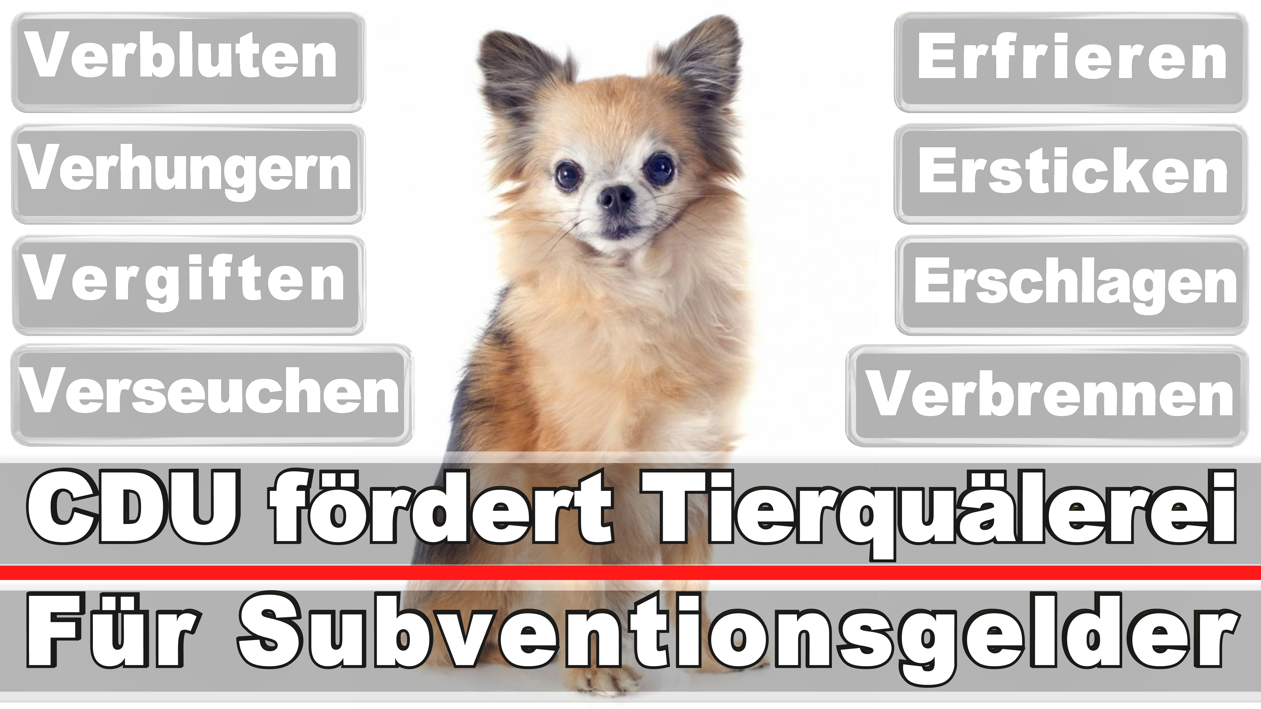 Landtagswahl-Bundestagswahl-CDU-SPD-FDP-AFD-Linke-Piraten (23)