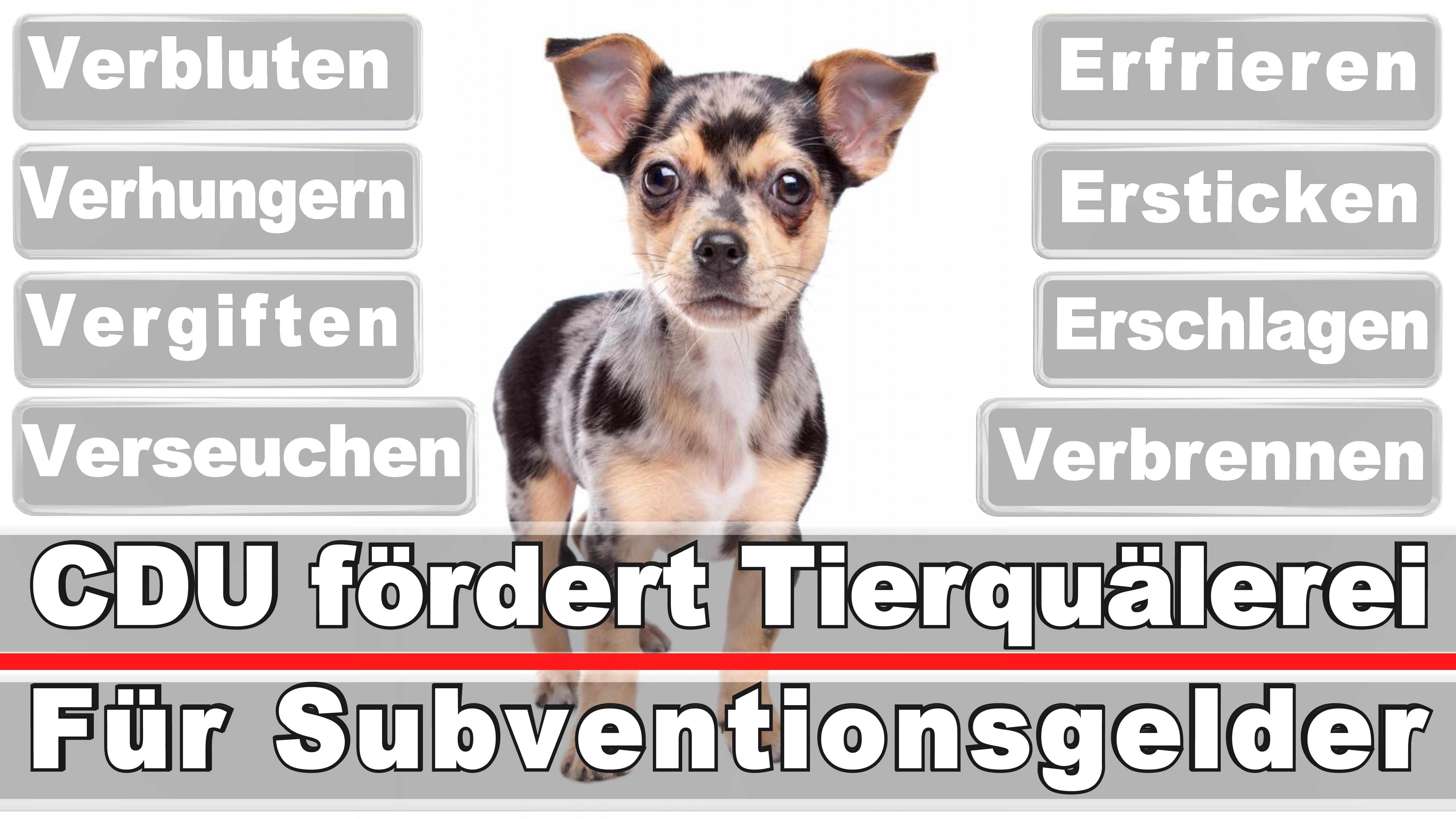 Landtagswahl-Bundestagswahl-CDU-SPD-FDP-AFD-Linke-Piraten (24)