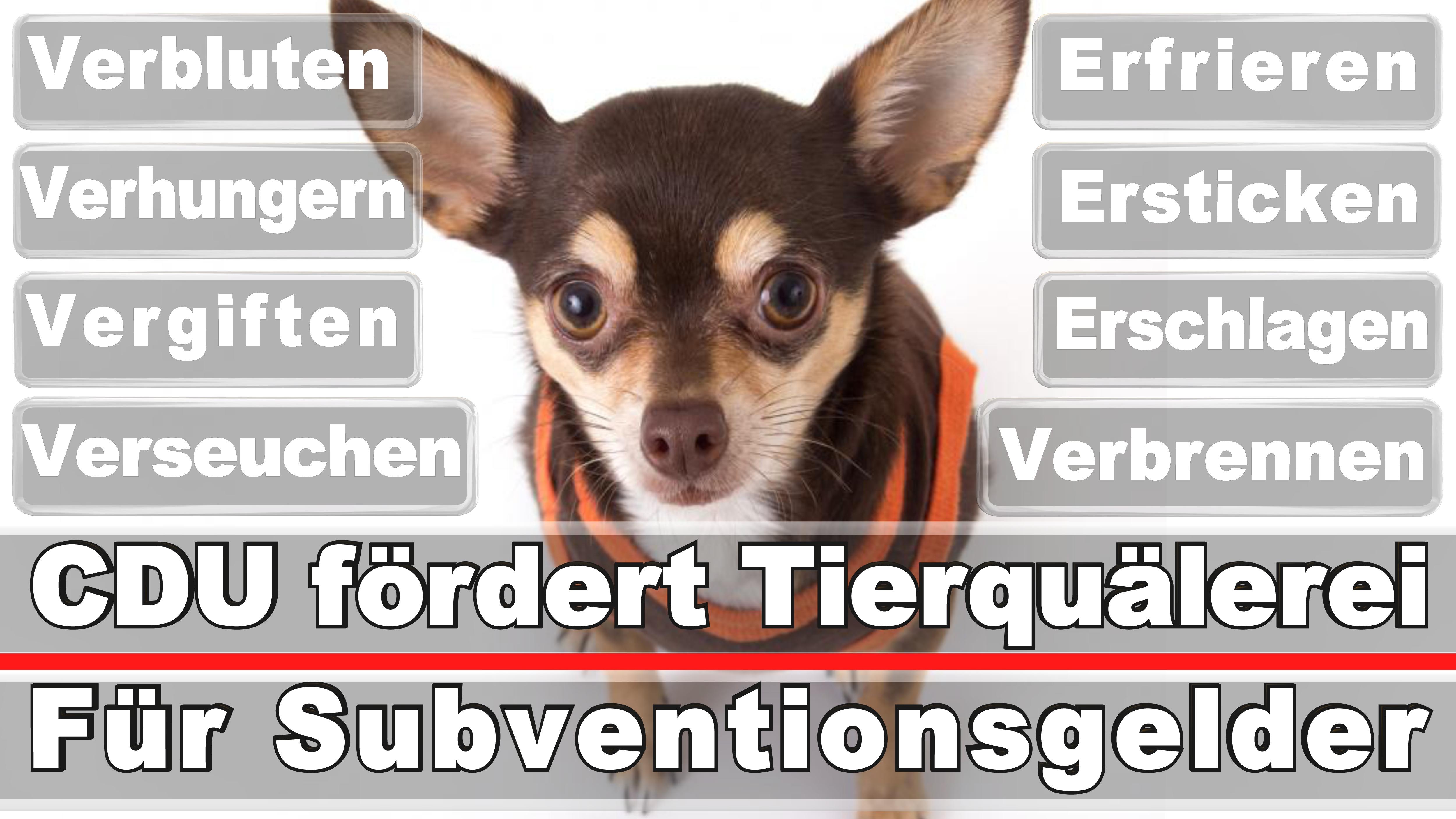 Landtagswahl-Bundestagswahl-CDU-SPD-FDP-AFD-Linke-Piraten (25)