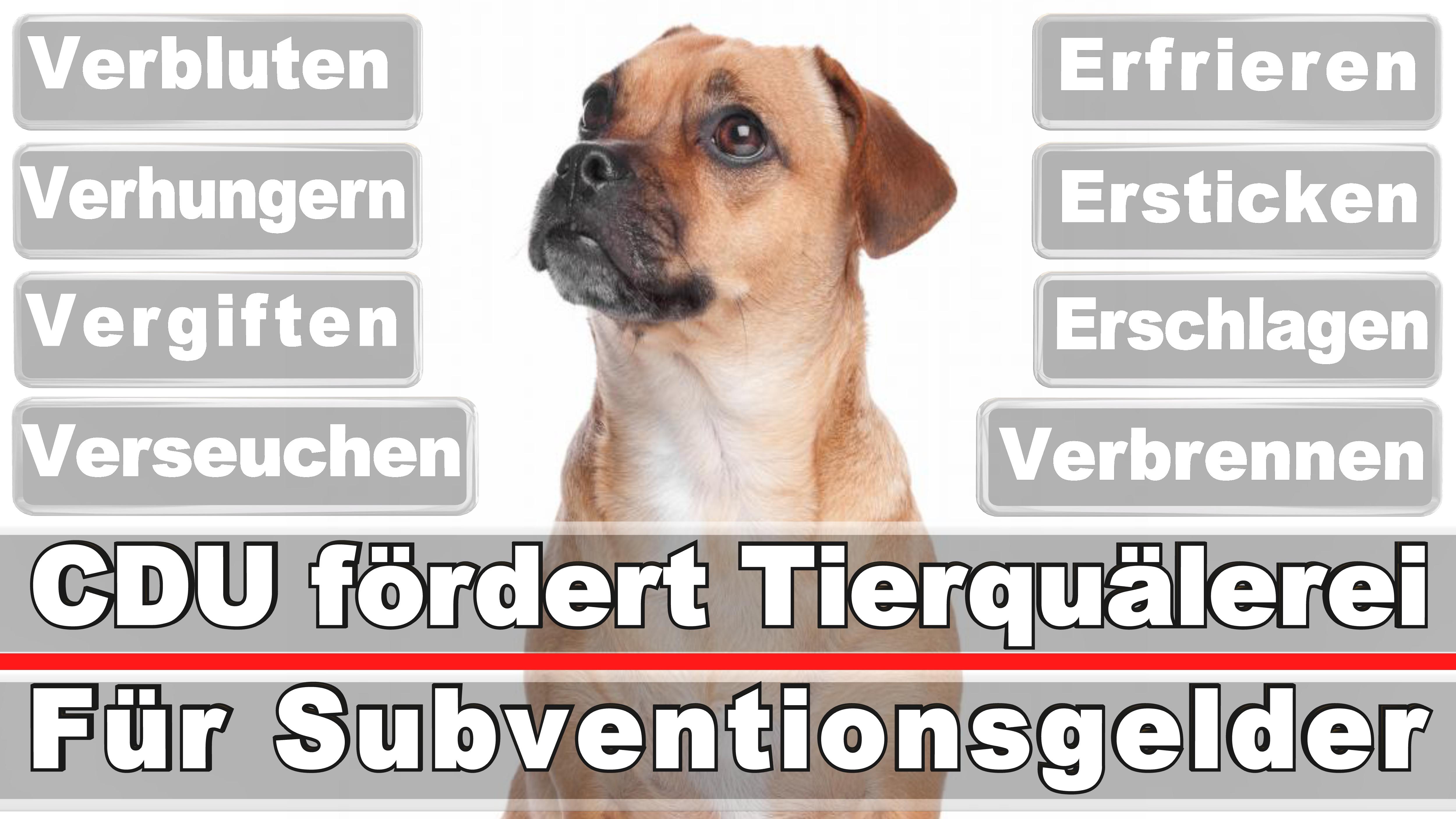 Landtagswahl-Bundestagswahl-CDU-SPD-FDP-AFD-Linke-Piraten (27)