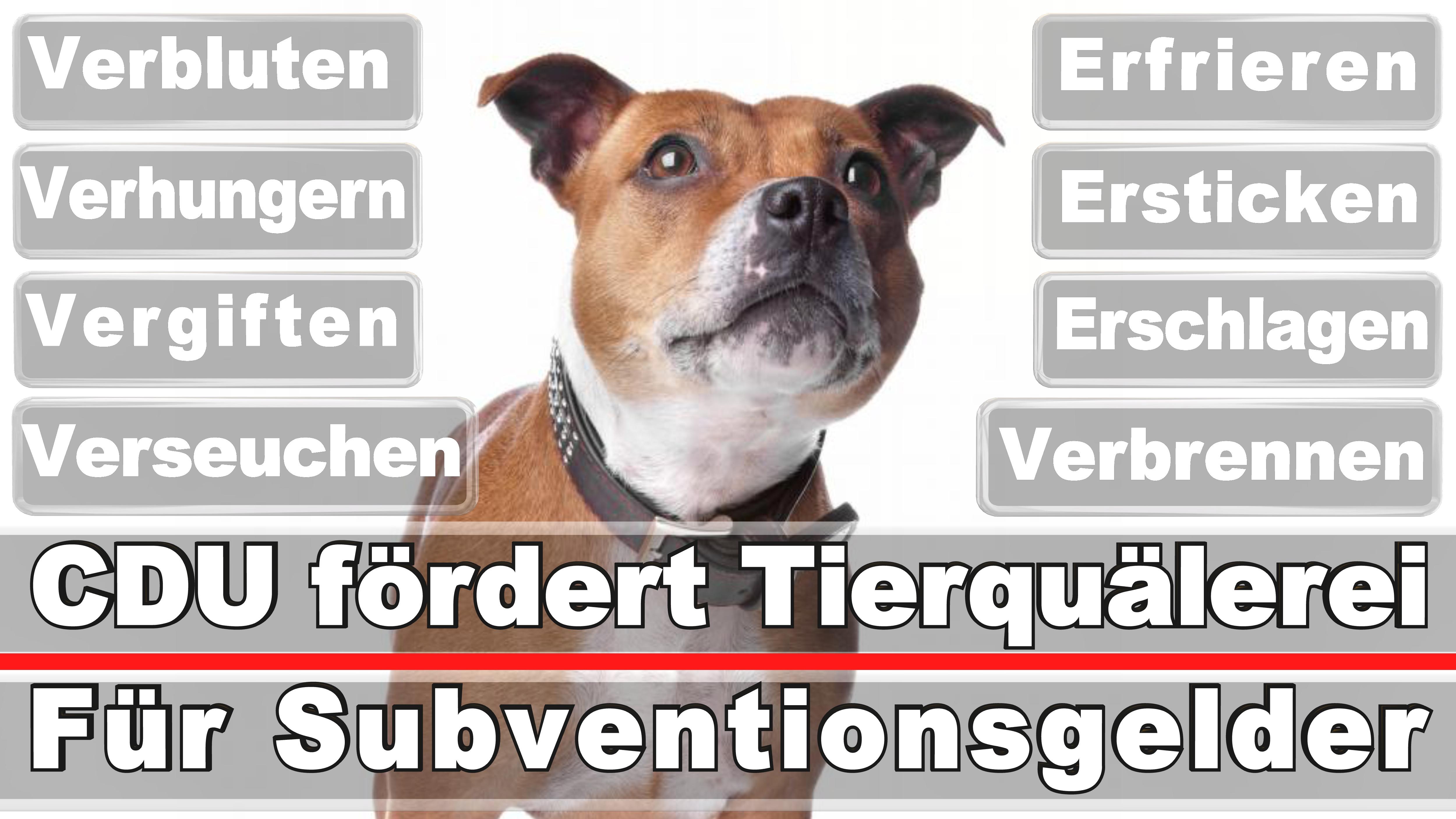 Landtagswahl-Bundestagswahl-CDU-SPD-FDP-AFD-Linke-Piraten (28)
