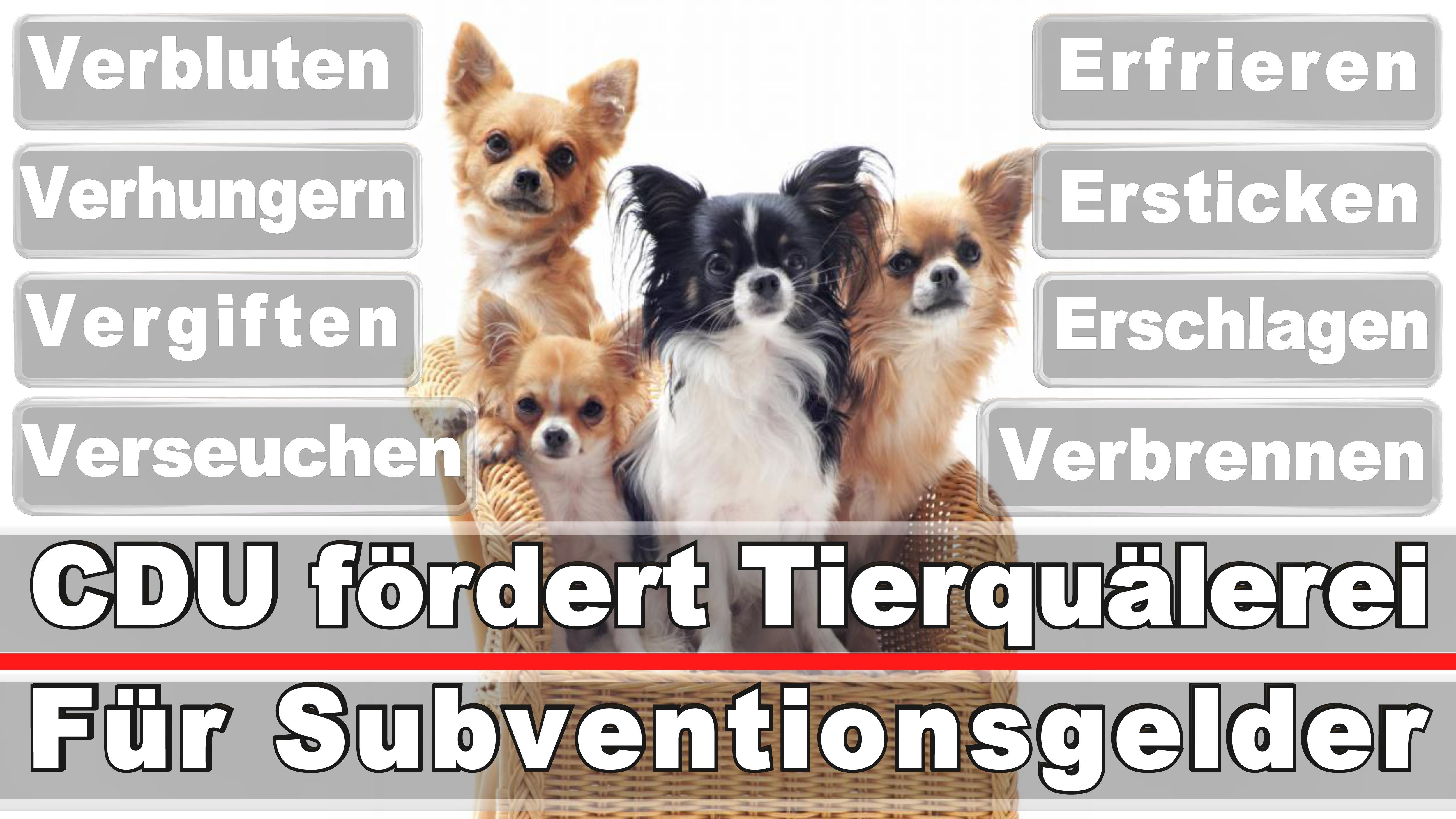 Landtagswahl-Bundestagswahl-CDU-SPD-FDP-AFD-Linke-Piraten (29)