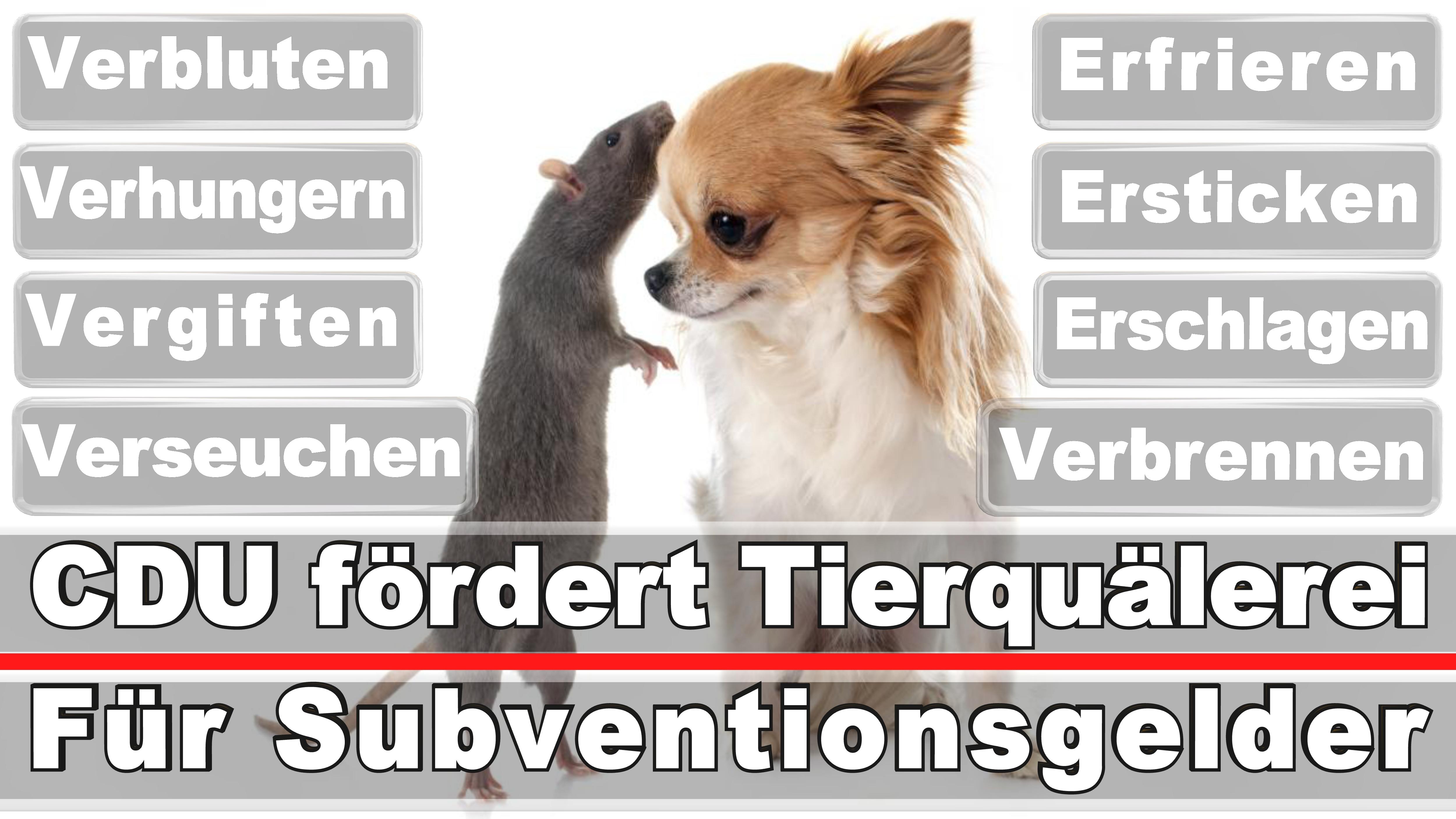 Landtagswahl-Bundestagswahl-CDU-SPD-FDP-AFD-Linke-Piraten (3)