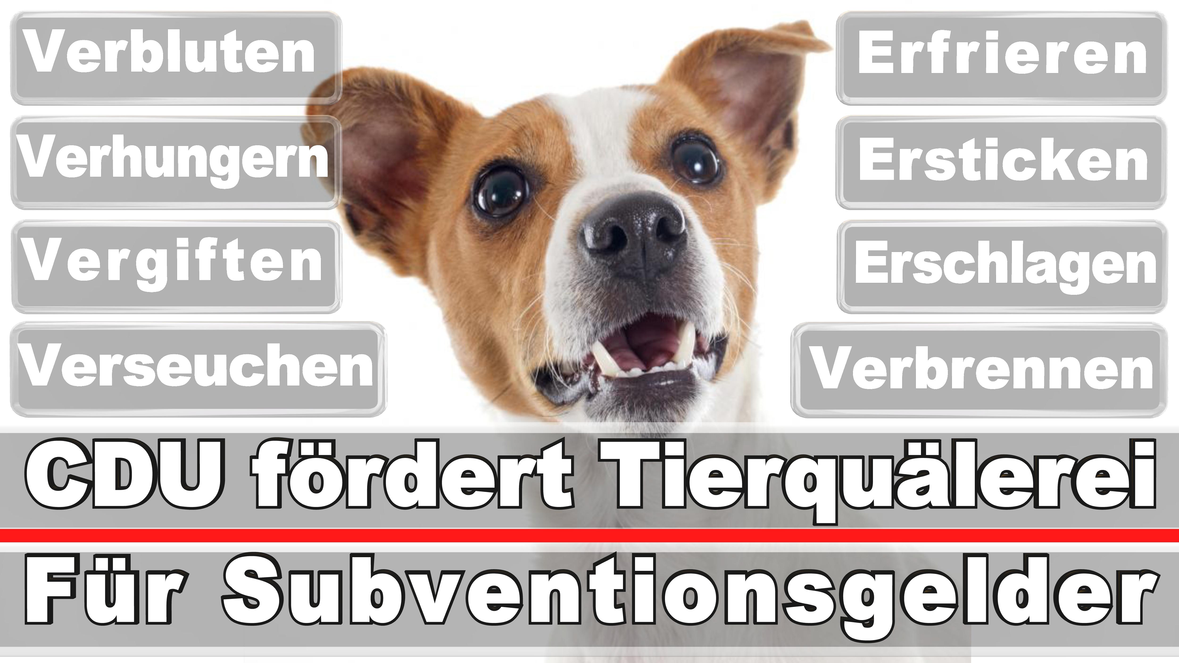Landtagswahl-Bundestagswahl-CDU-SPD-FDP-AFD-Linke-Piraten (30)