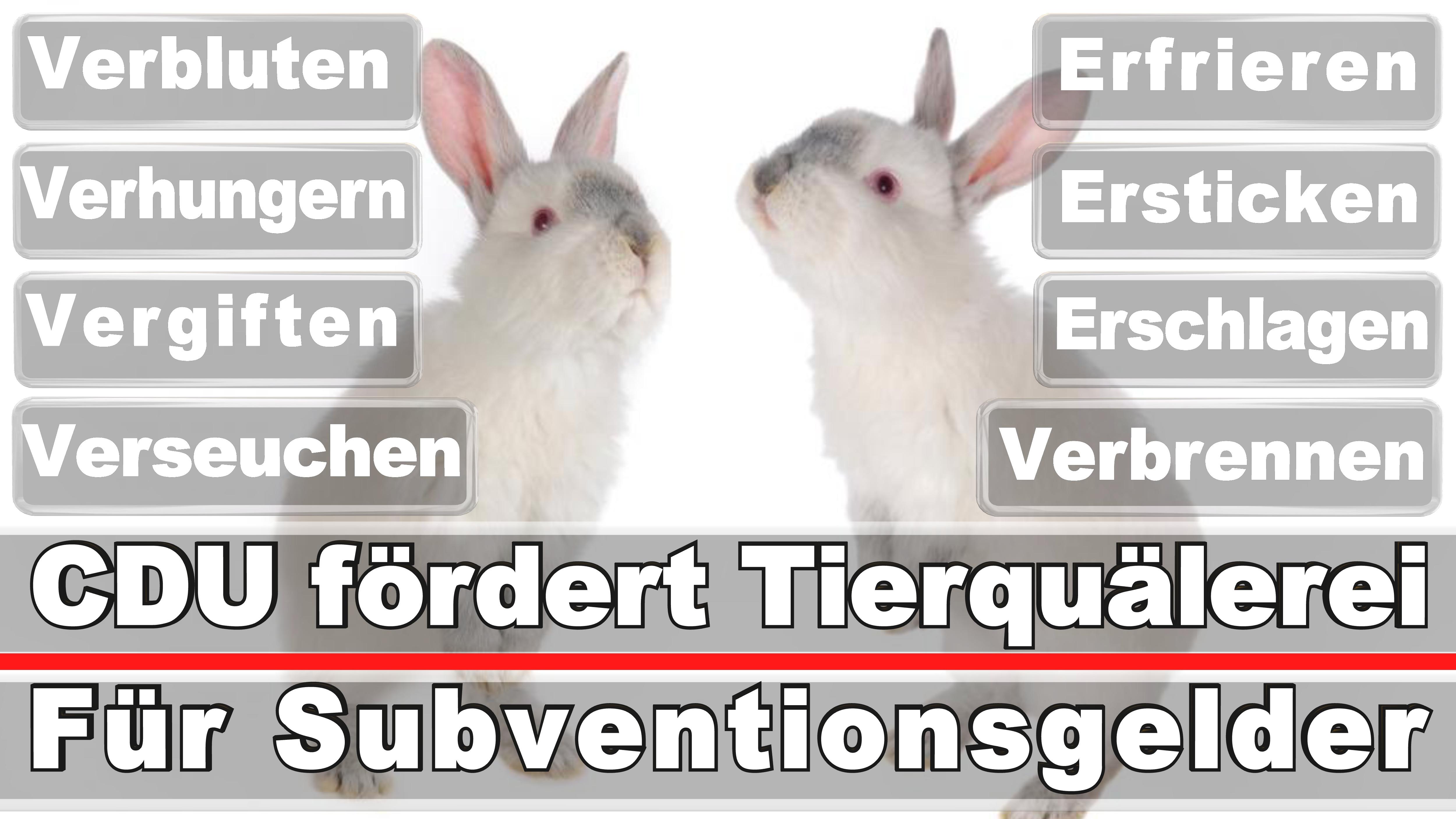 Landtagswahl-Bundestagswahl-CDU-SPD-FDP-AFD-Linke-Piraten (4)
