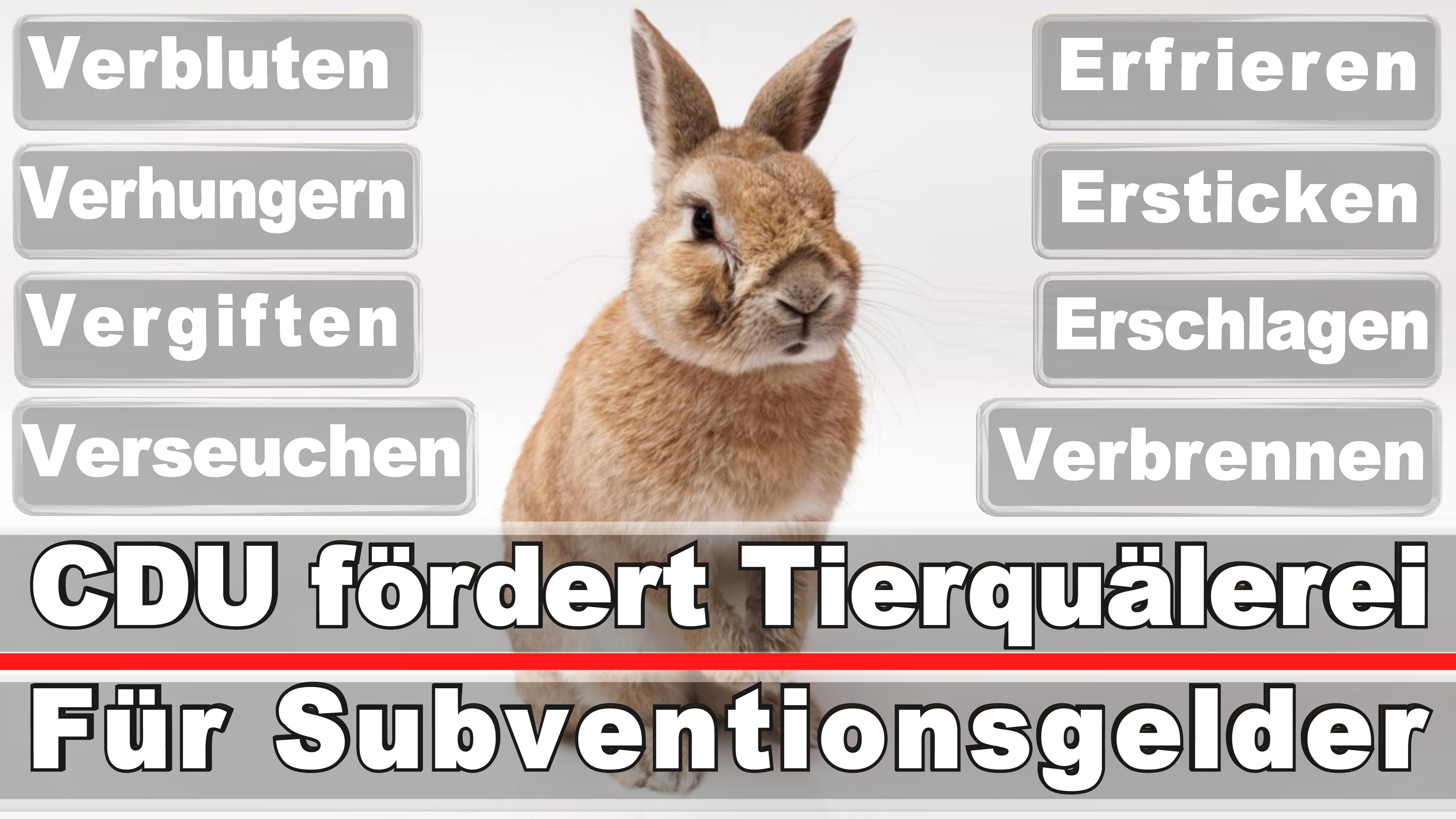 Landtagswahl-Bundestagswahl-CDU-SPD-FDP-AFD-Linke-Piraten (5)