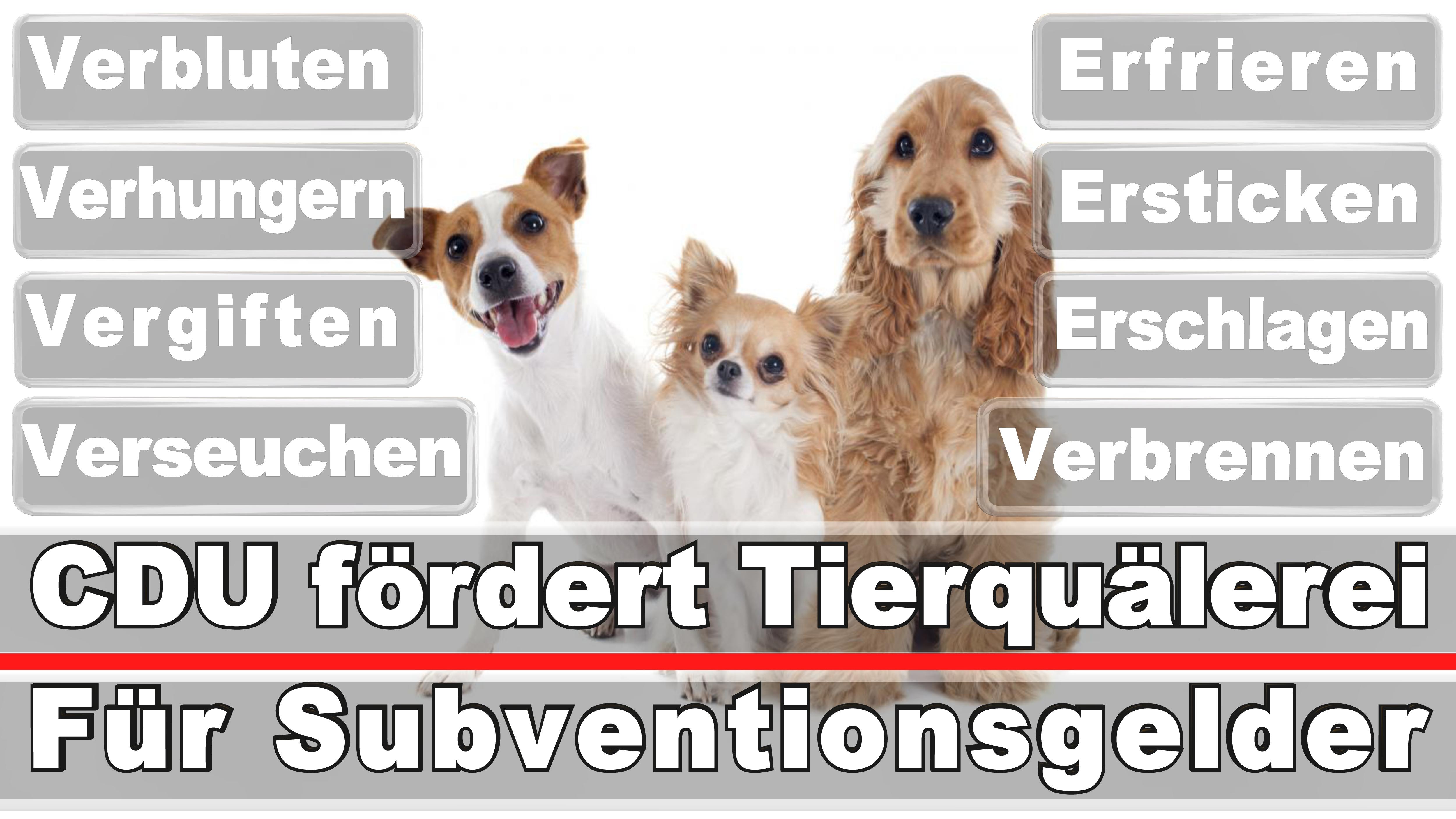 Landtagswahl-Bundestagswahl-CDU-SPD-FDP-AFD-Linke-Piraten (51)