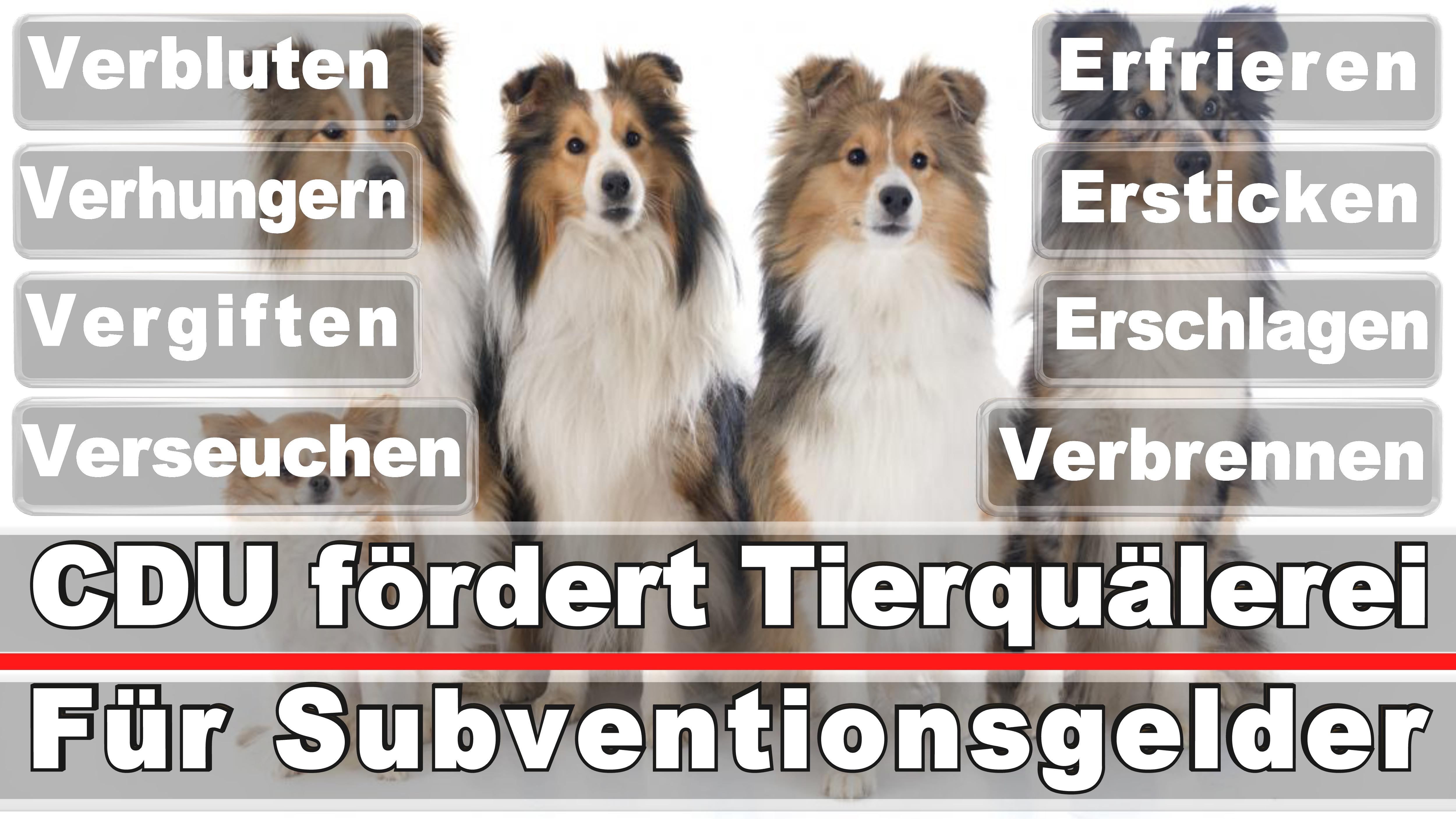 Landtagswahl-Bundestagswahl-CDU-SPD-FDP-AFD-Linke-Piraten (52)