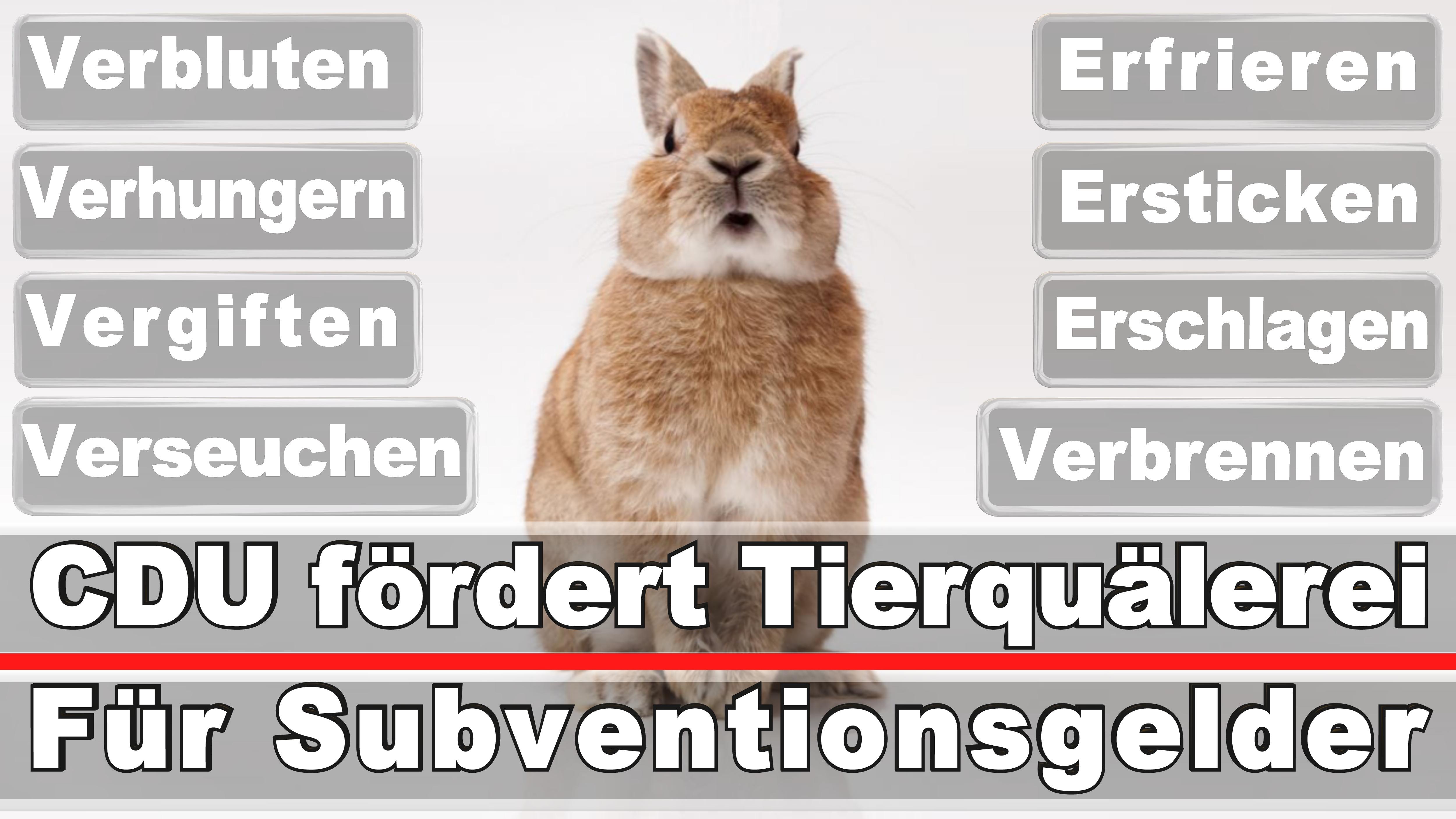 Landtagswahl-Bundestagswahl-CDU-SPD-FDP-AFD-Linke-Piraten (6)