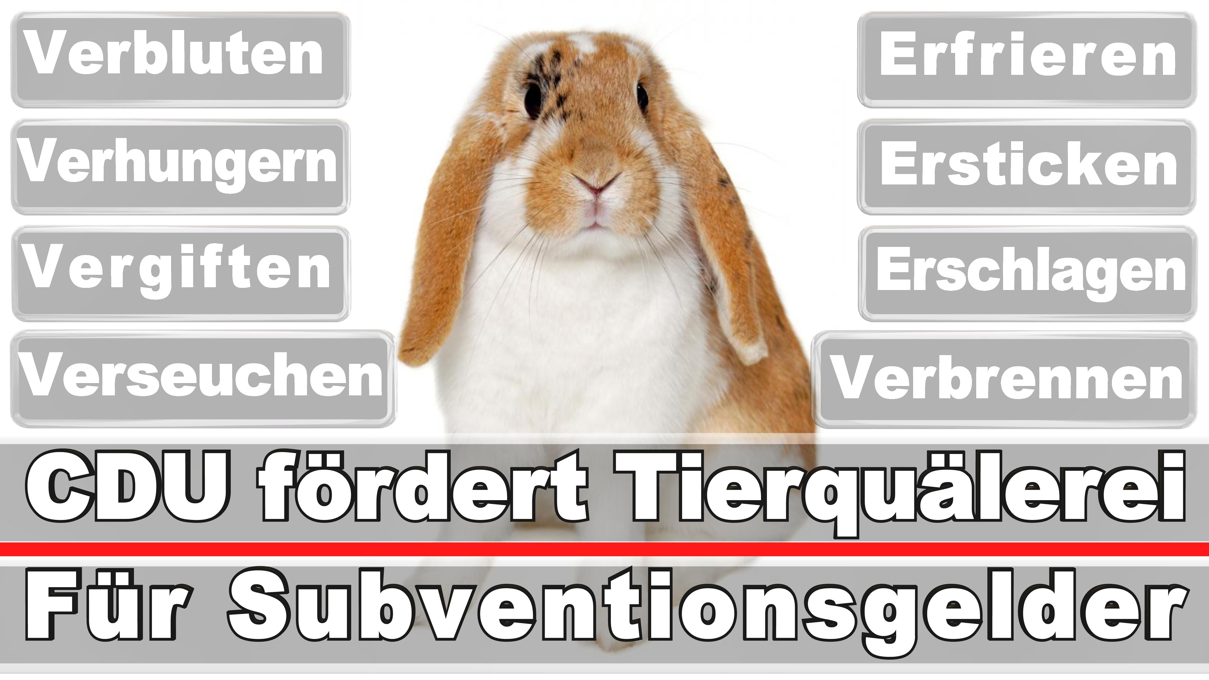 Landtagswahl-Bundestagswahl-CDU-SPD-FDP-AFD-Linke-Piraten (7)