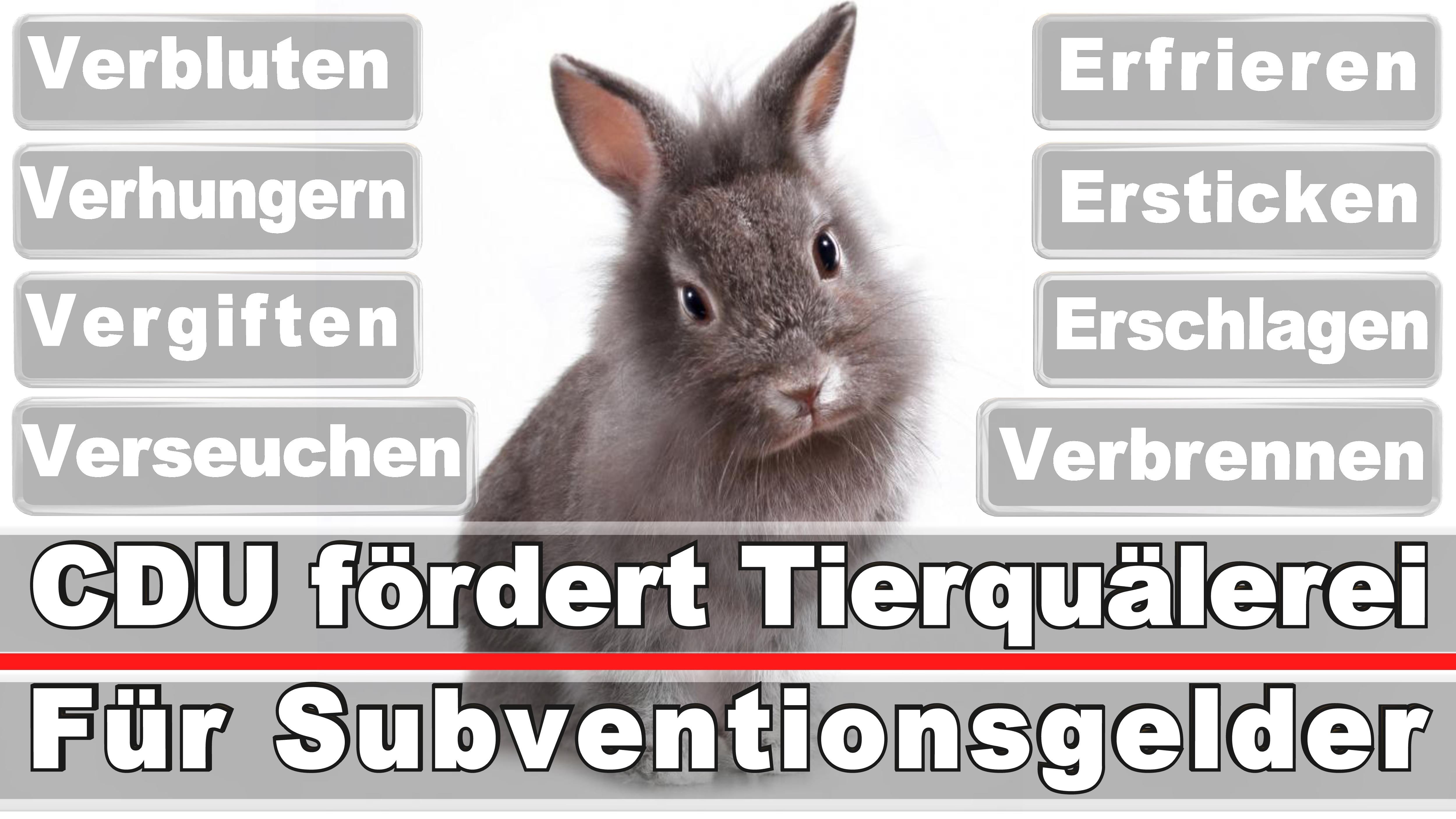 Landtagswahl-Bundestagswahl-CDU-SPD-FDP-AFD-Linke-Piraten (8)