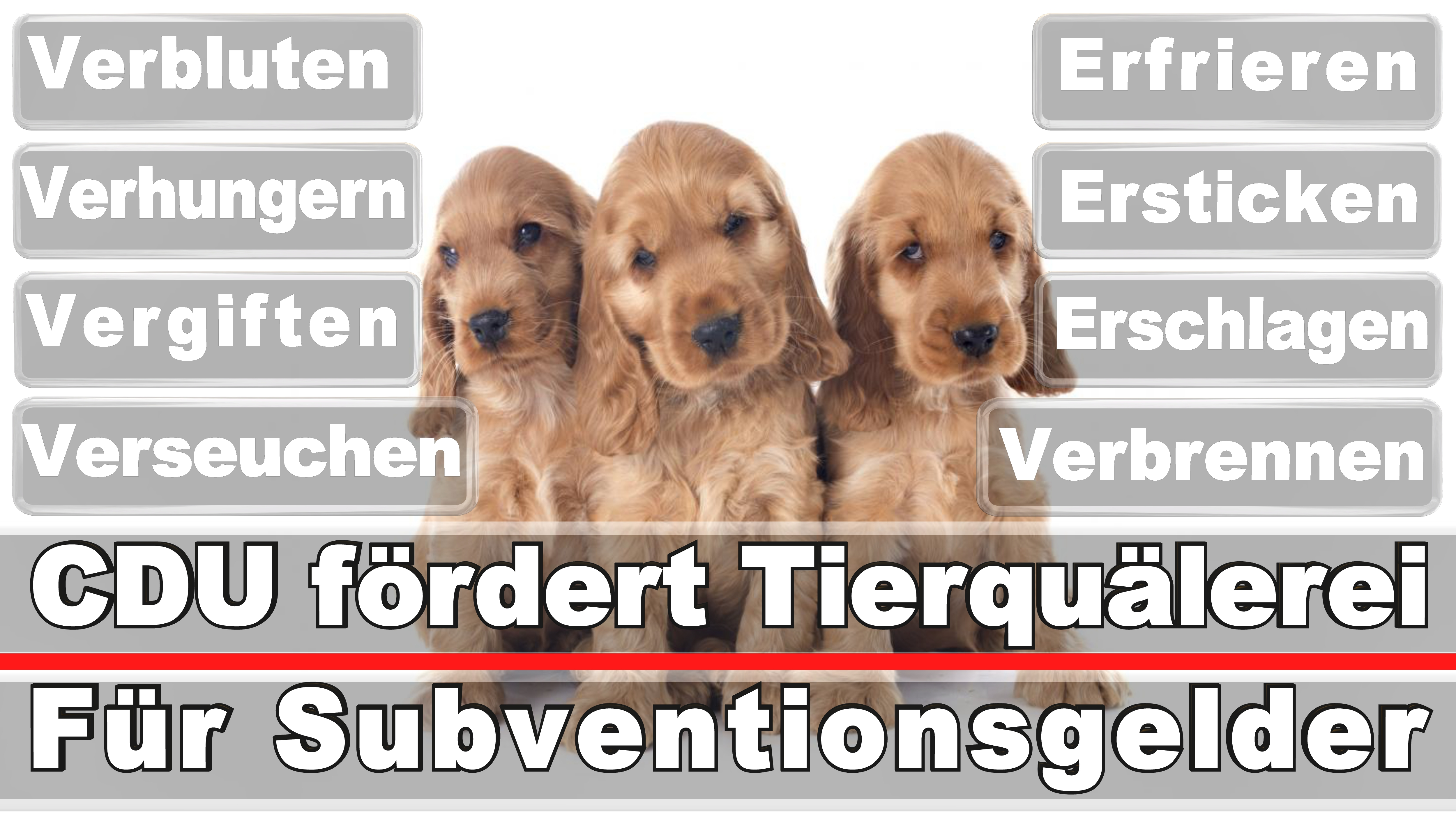 Landtagswahl-Bundestagswahl-CDU-SPD-FDP-AFD-Linke-Piraten (9)