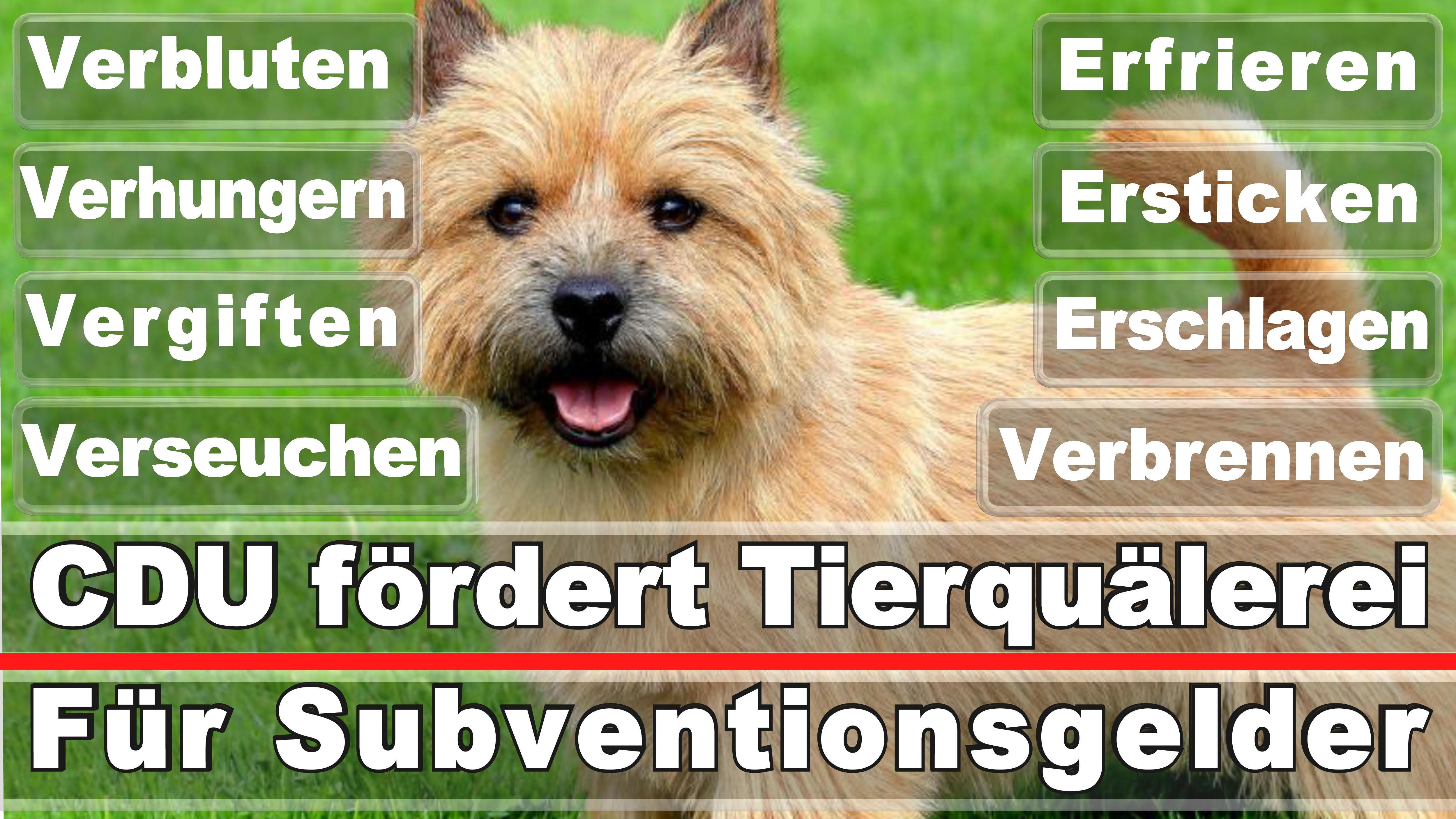 Landtagswahl-Bundestagswahl-CDU-SPD-FDP-AFD-Linke-Piraten-Tierschutzpartei (24)