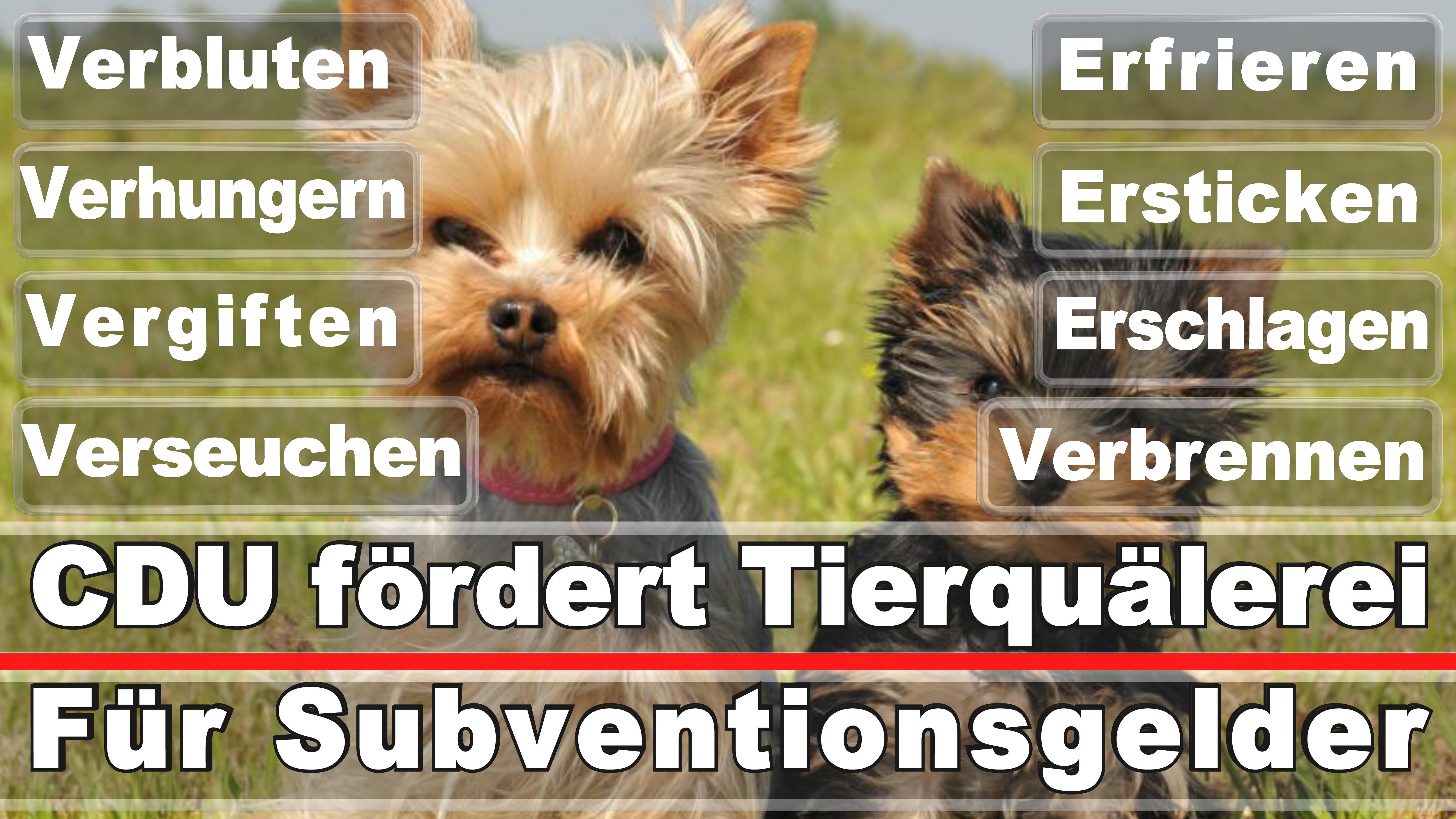 Landtagswahl-Bundestagswahl-CDU-SPD-FDP-AFD-Linke-Piraten-Tierschutzpartei (25)