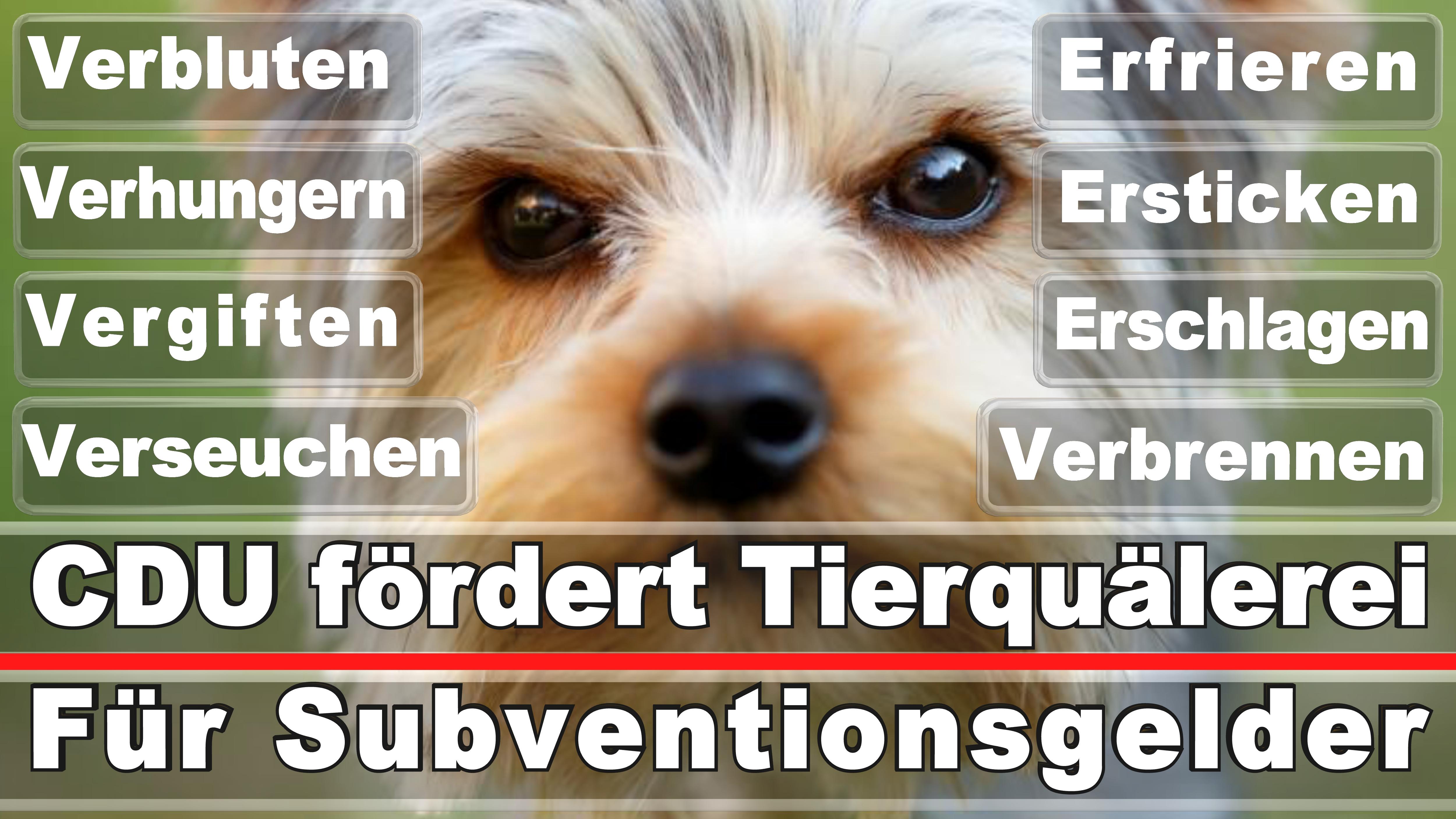 Landtagswahl-Bundestagswahl-CDU-SPD-FDP-AFD-Linke-Piraten-Tierschutzpartei (28)