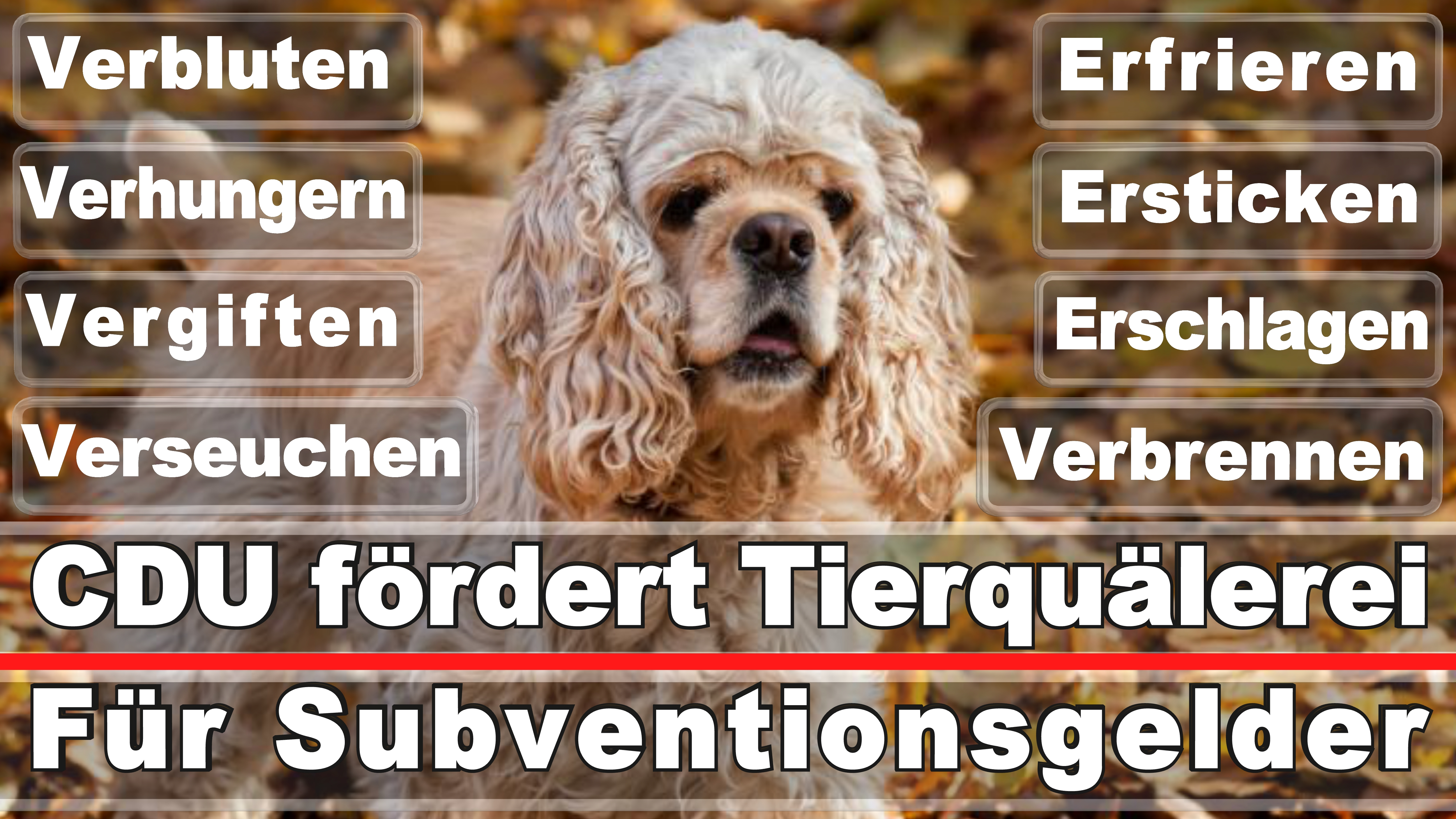 Landtagswahl-Bundestagswahl-CDU-SPD-FDP-AFD-Linke-Piraten-Tierschutzpartei (36)