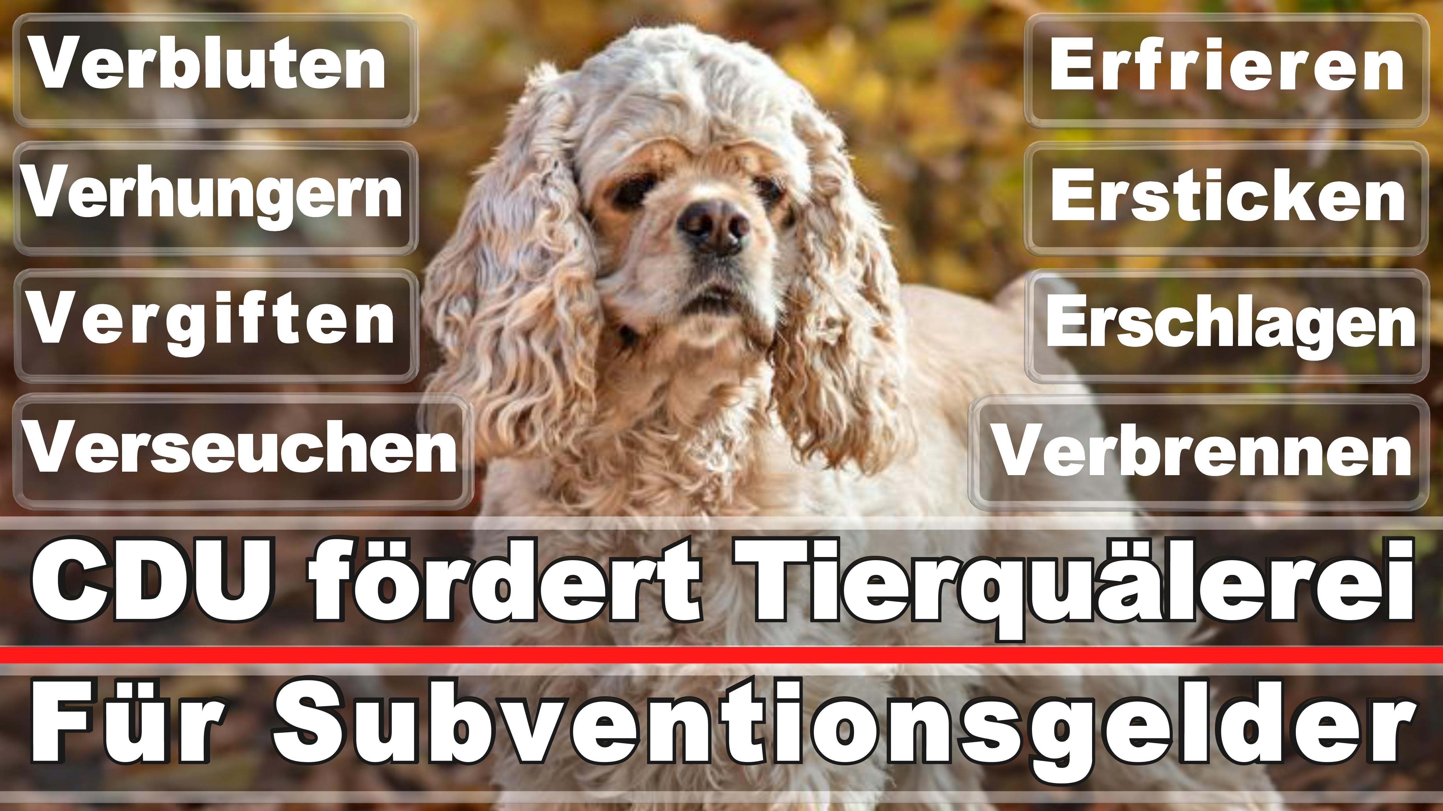 Landtagswahl-Bundestagswahl-CDU-SPD-FDP-AFD-Linke-Piraten-Tierschutzpartei (37)