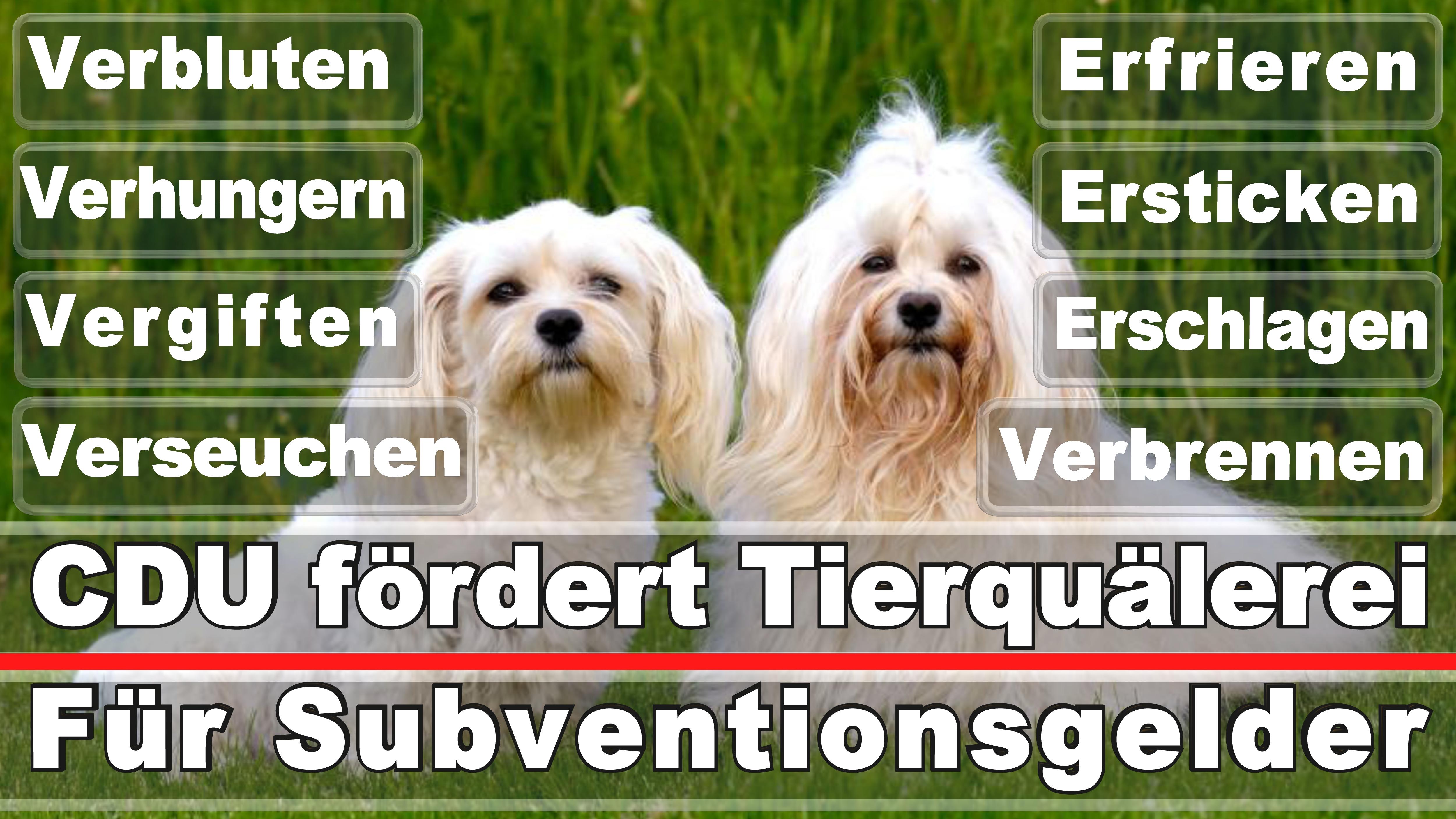 Landtagswahl-Bundestagswahl-CDU-SPD-FDP-AFD-Linke-Piraten-Tierschutzpartei (41)