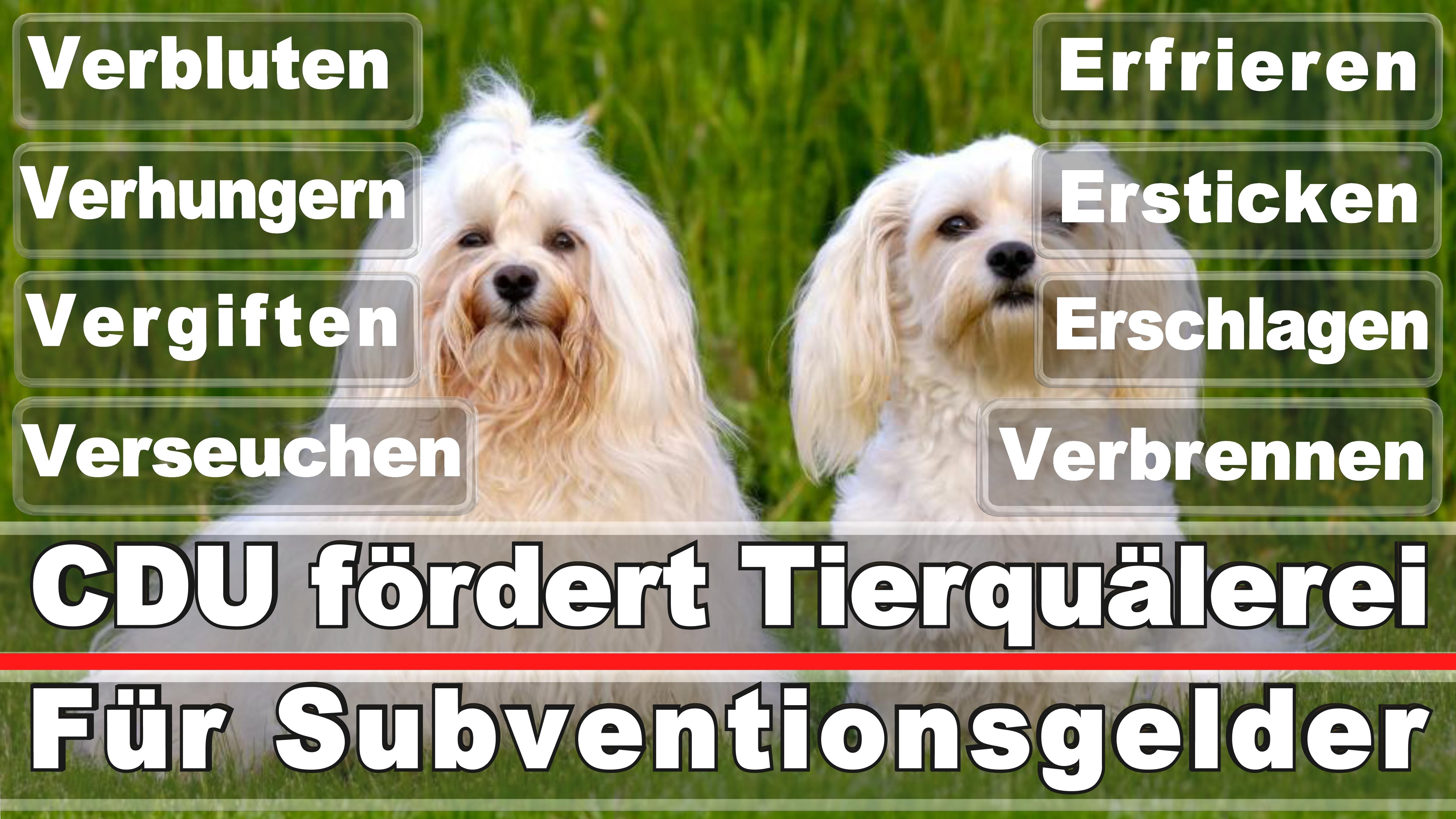 Landtagswahl-Bundestagswahl-CDU-SPD-FDP-AFD-Linke-Piraten-Tierschutzpartei (42)