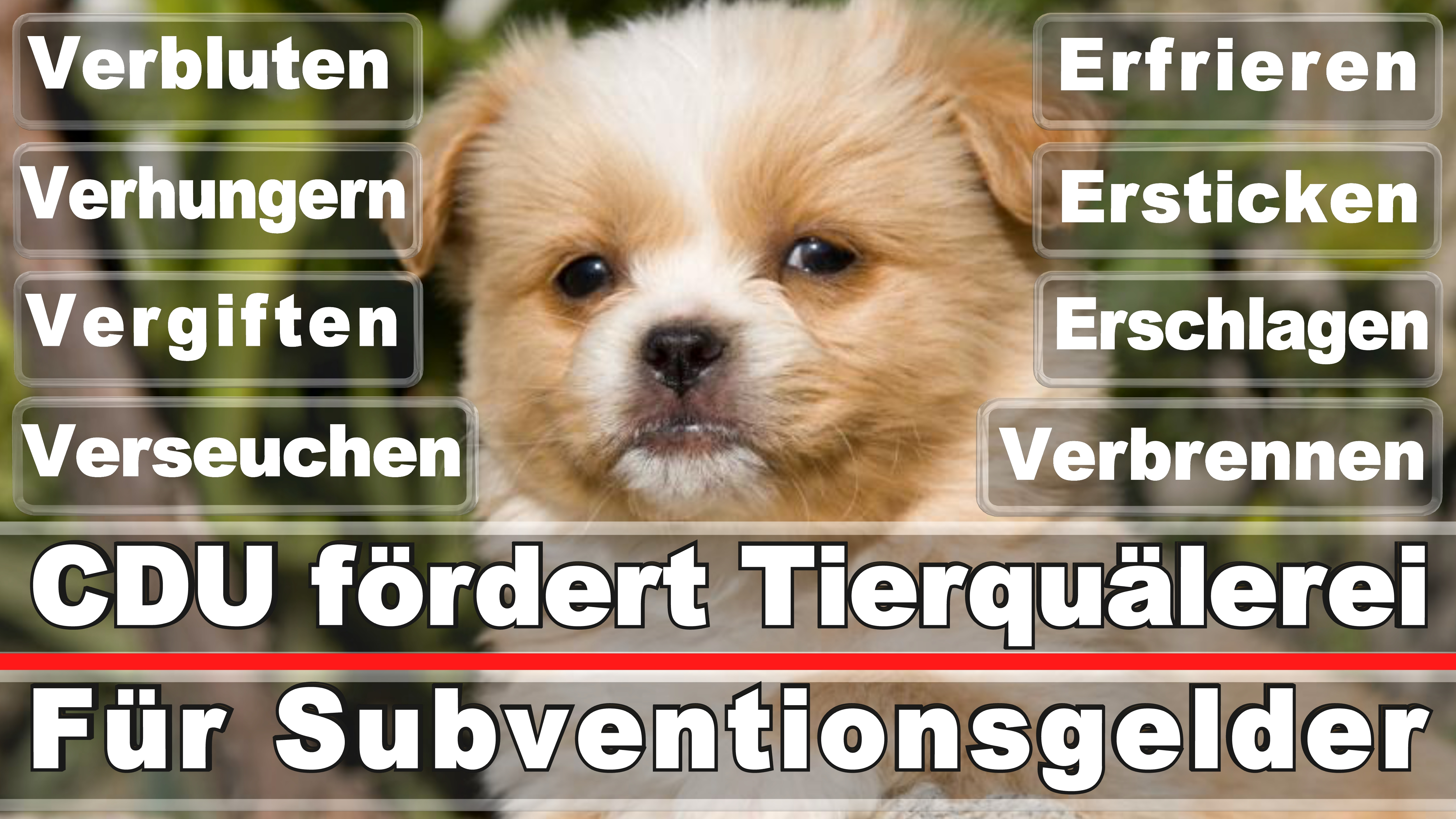 Landtagswahl-Bundestagswahl-CDU-SPD-FDP-AFD-Linke-Piraten-Tierschutzpartei (44)