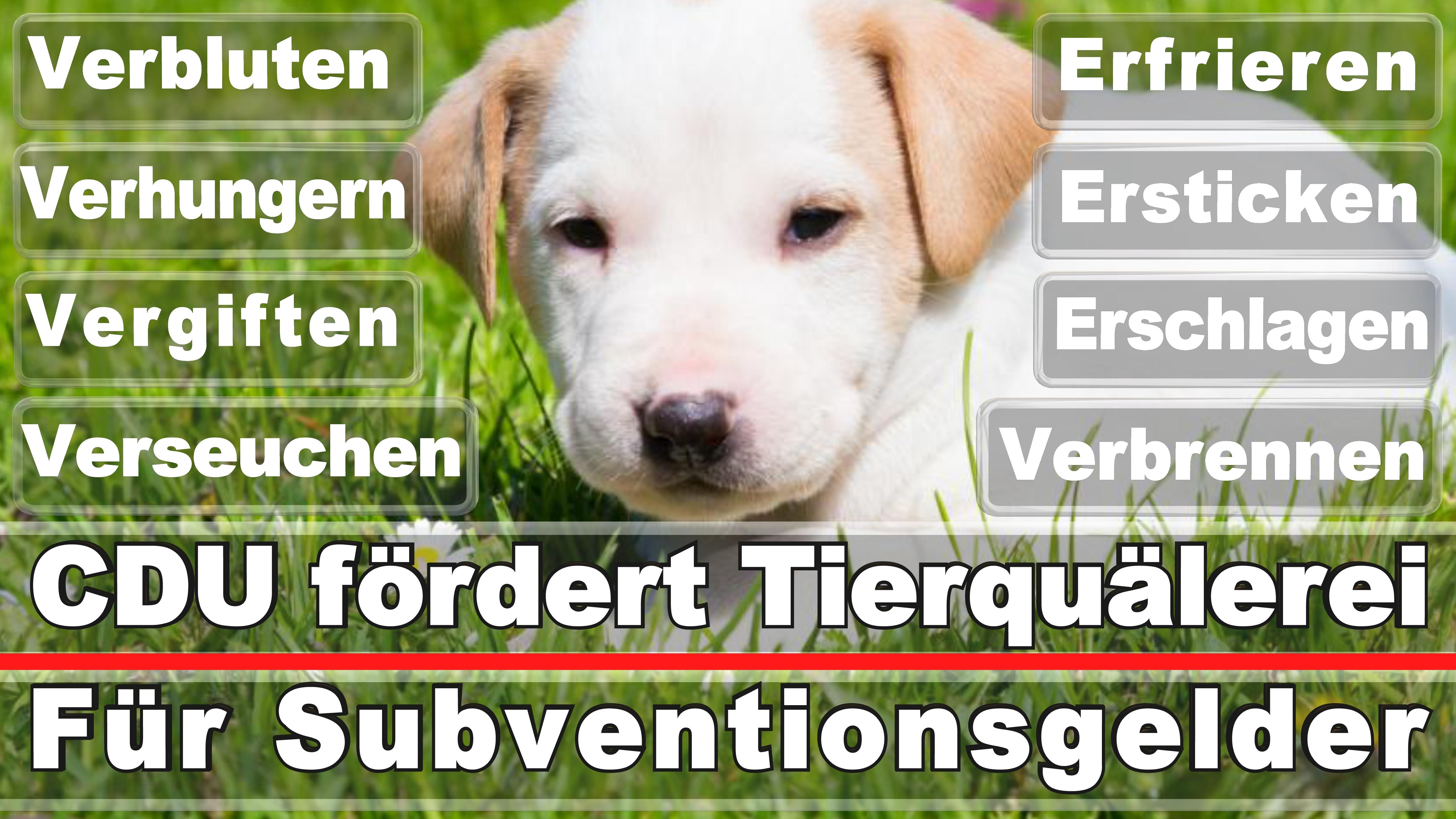 Landtagswahl-Bundestagswahl-CDU-SPD-FDP-AFD-Linke-Piraten-Tierschutzpartei (47)