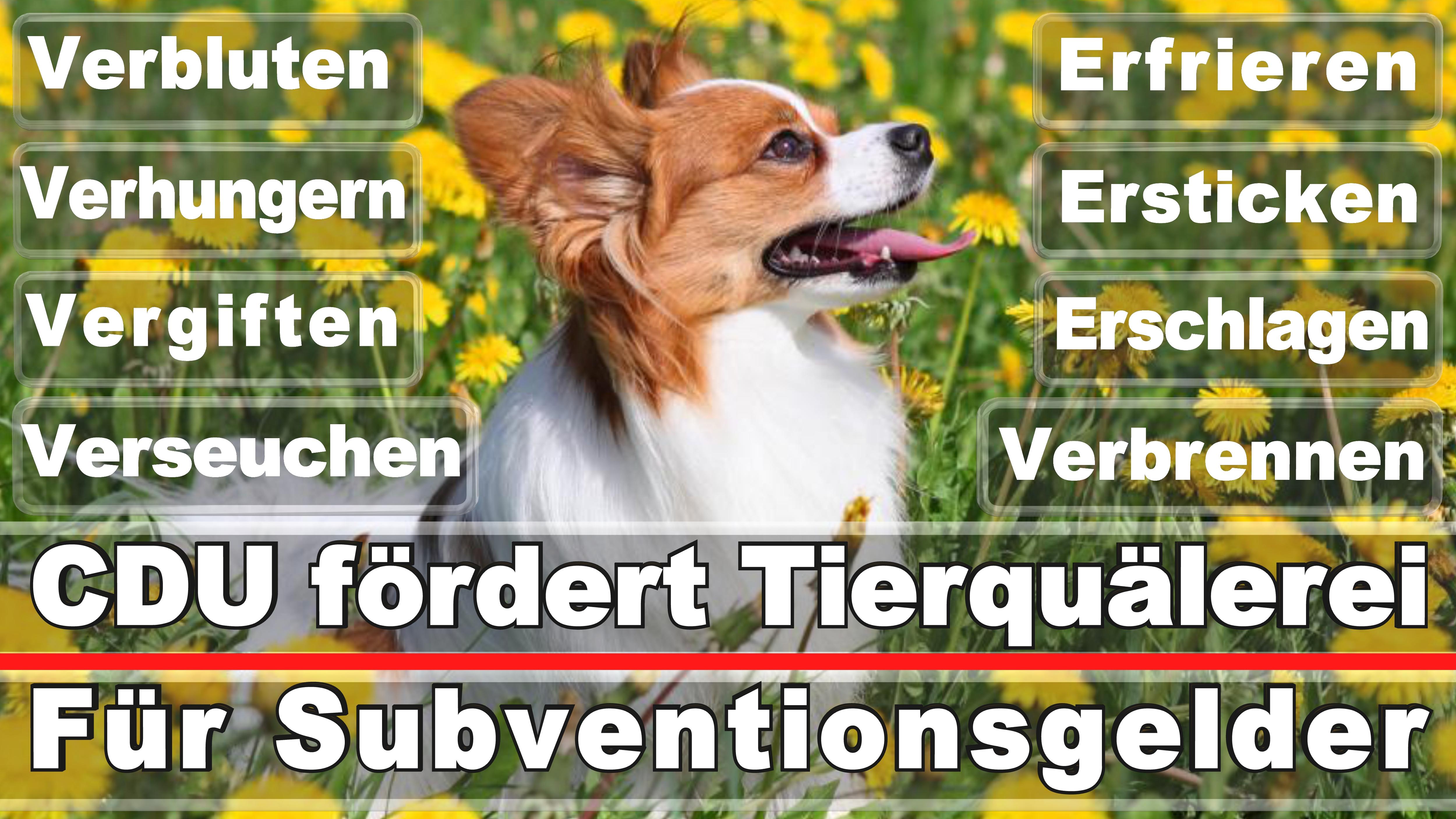Landtagswahl-Bundestagswahl-CDU-SPD-FDP-AFD-Linke-Piraten-Tierschutzpartei (50)