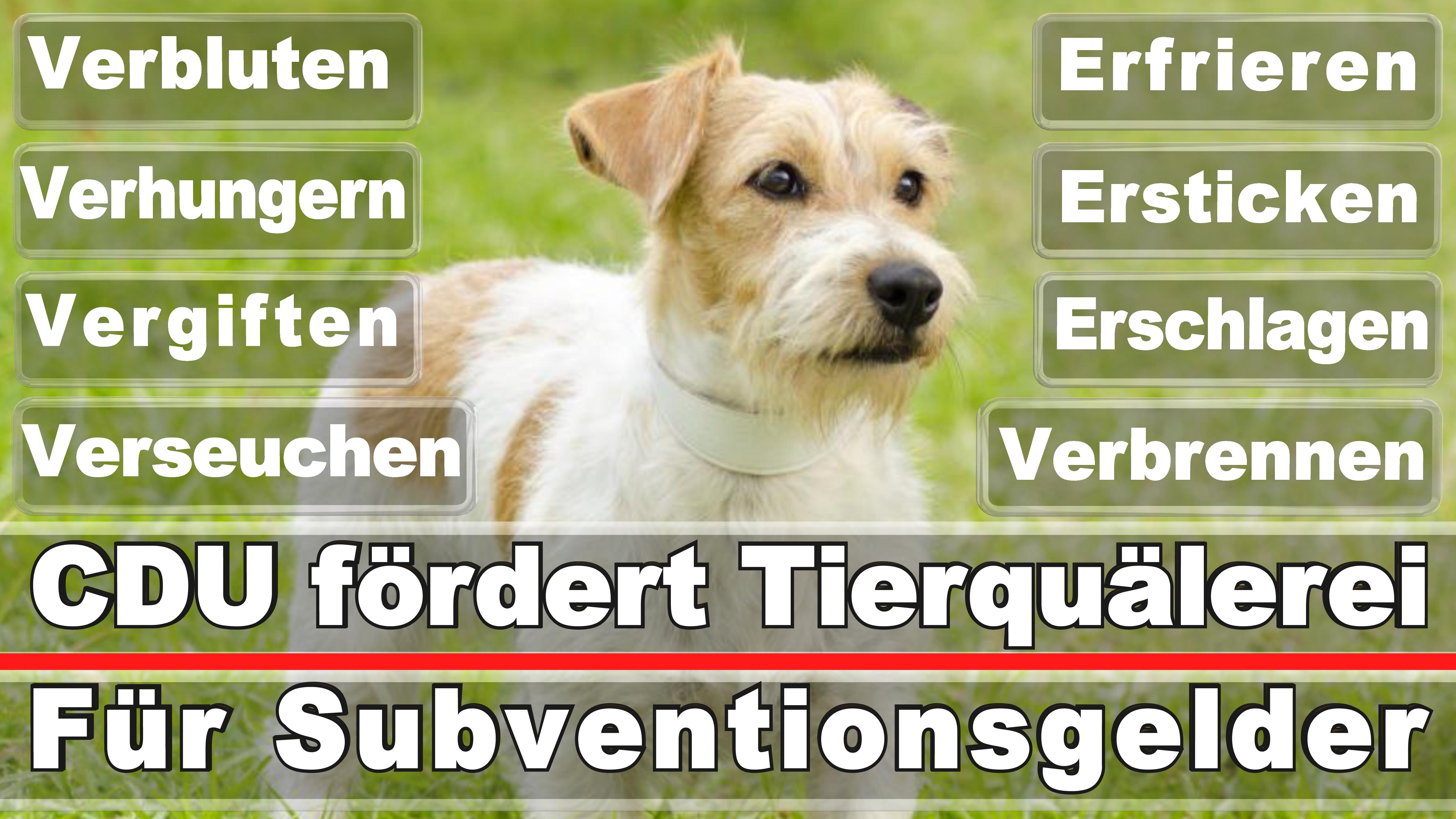 Landtagswahl-Bundestagswahl-CDU-SPD-FDP-AFD-Linke-Piraten-Tierschutzpartei (51)