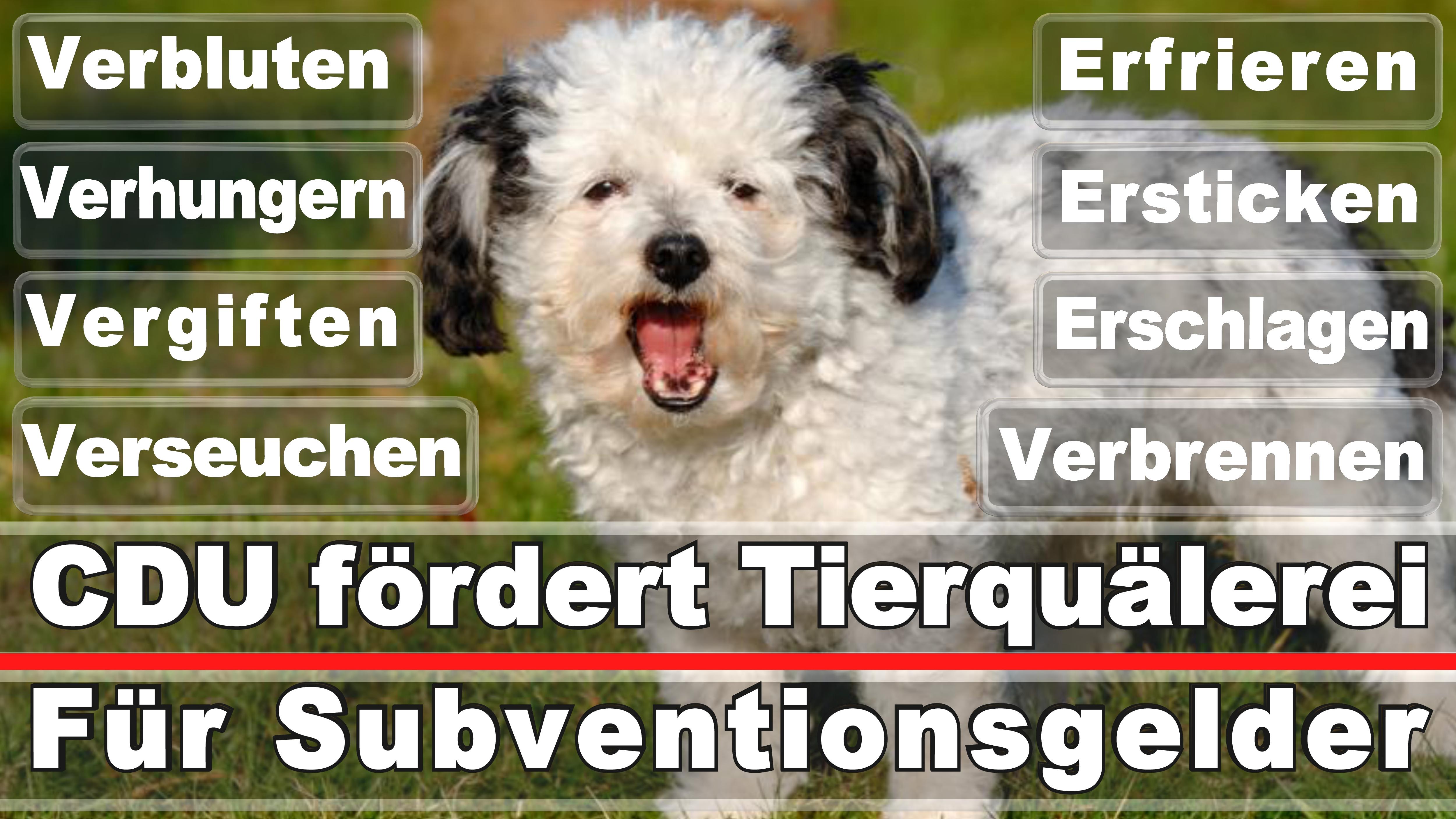 Landtagswahl-Bundestagswahl-CDU-SPD-FDP-AFD-Linke-Piraten-Tierschutzpartei (52)